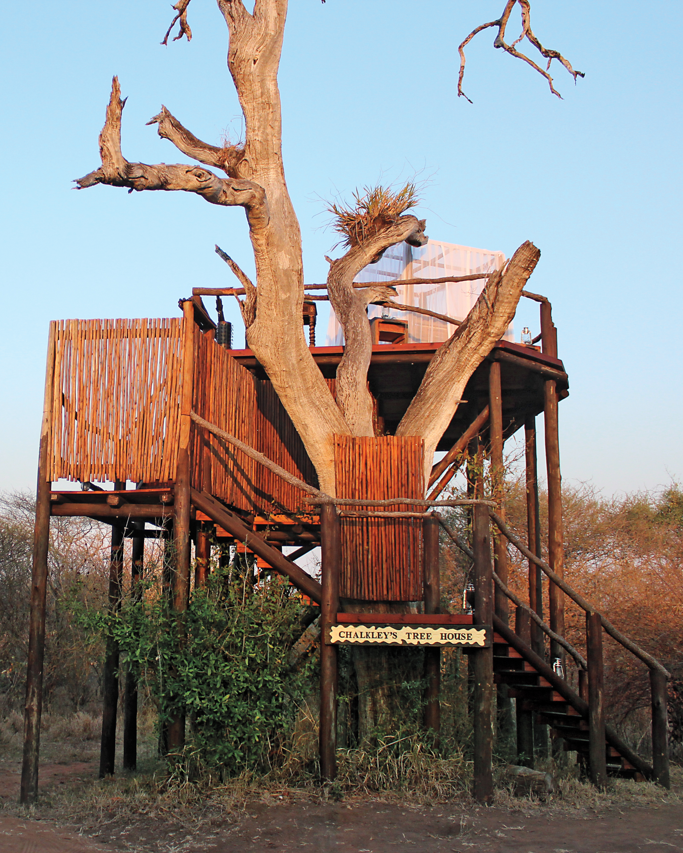 treehouse-mws109850.jpg
