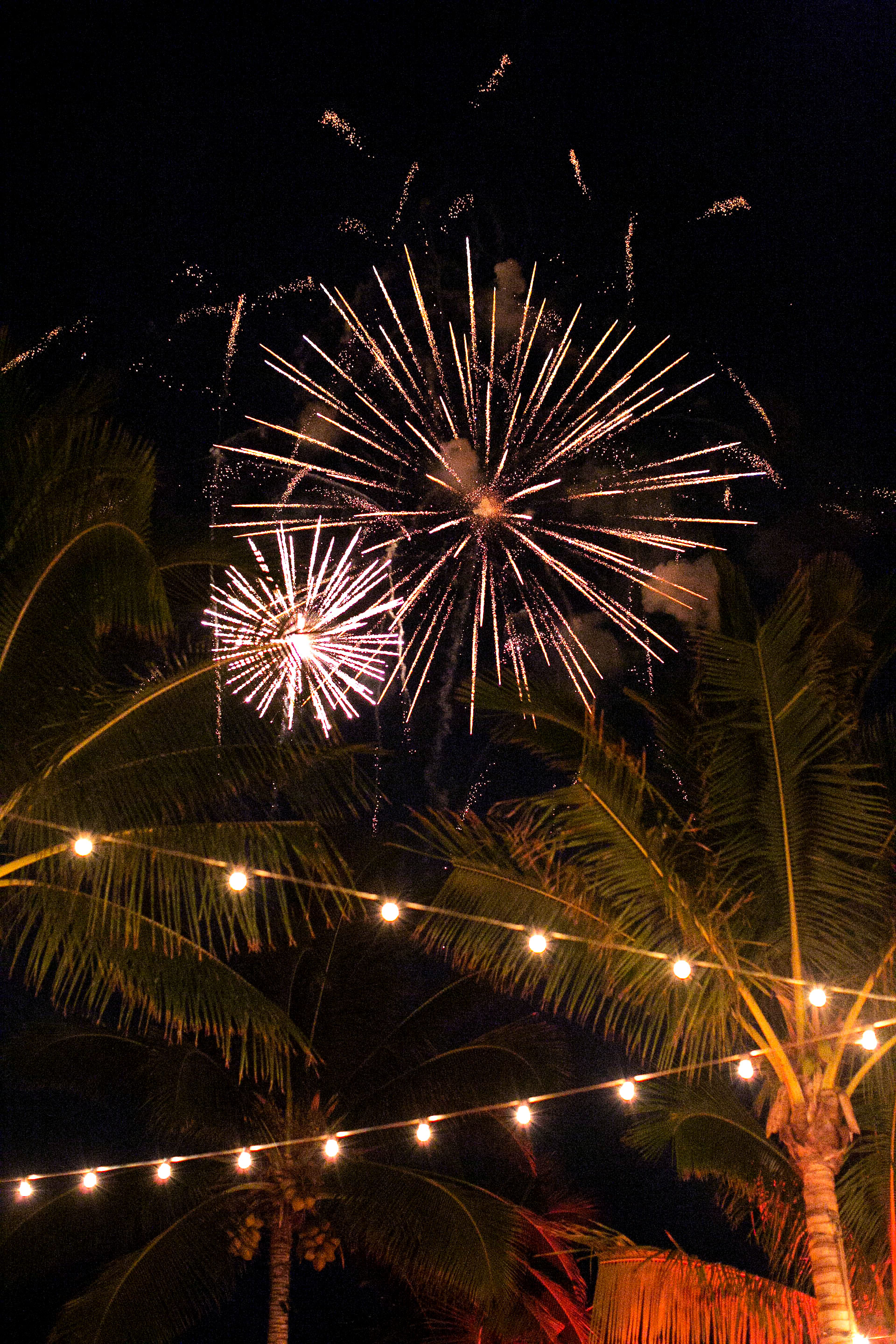 fireworks palm trees