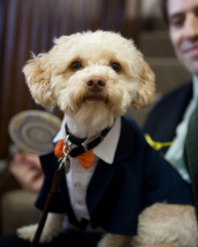 bow-ties-dogs-hugo-0161-0814.jpg