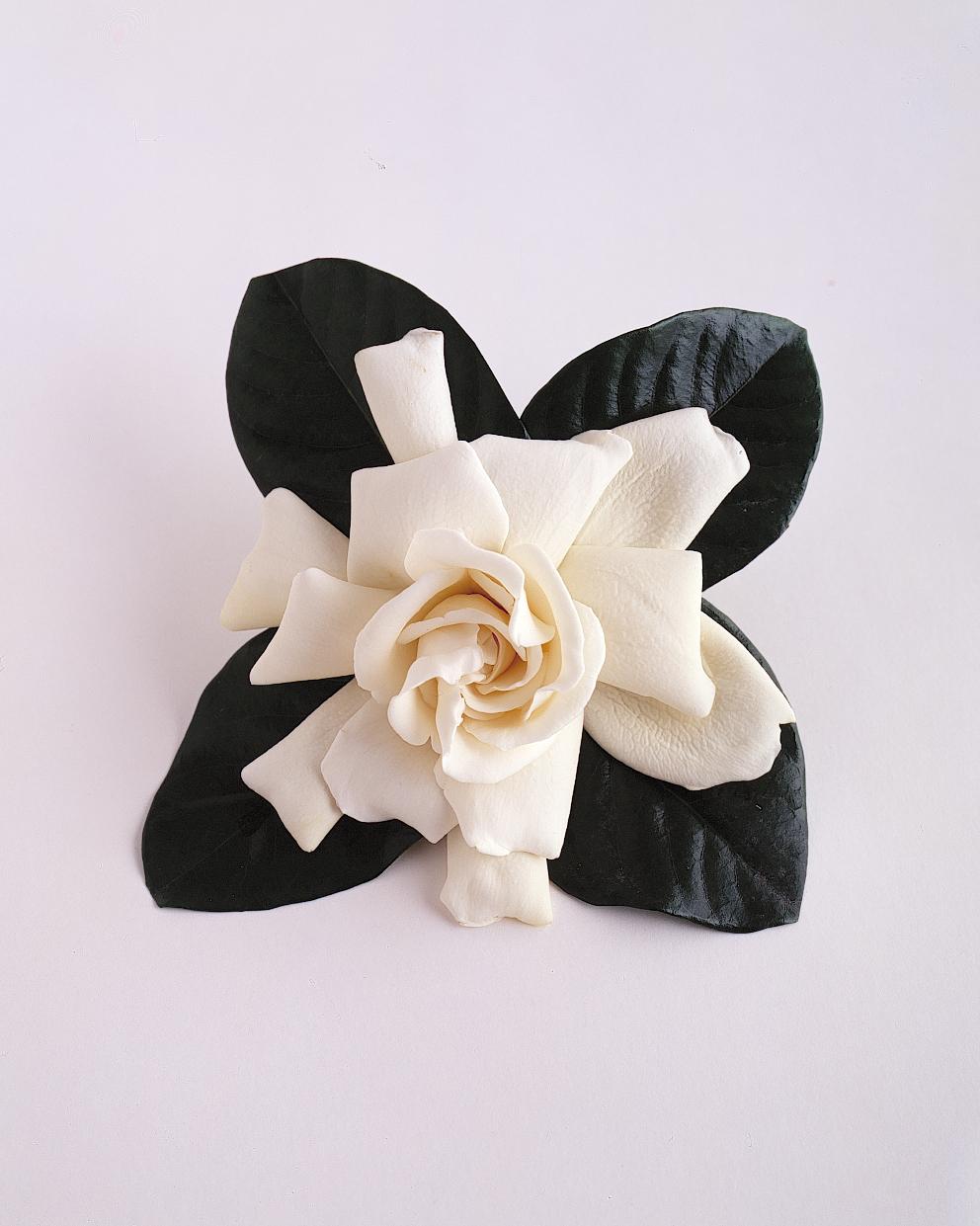 flower-glossary-gardinia-a98432-0415.jpg