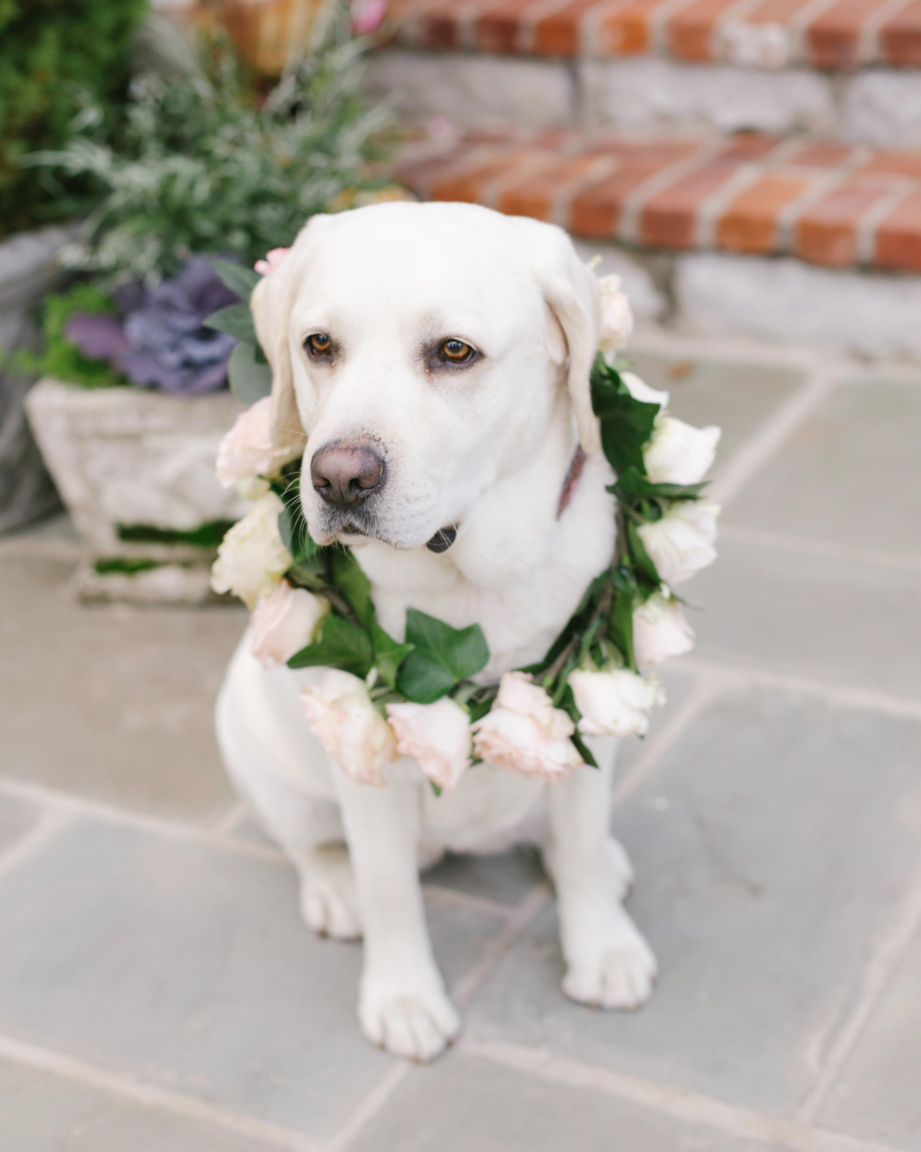 destiny-taylor-wedding-dog-211-s112347-1115.jpg