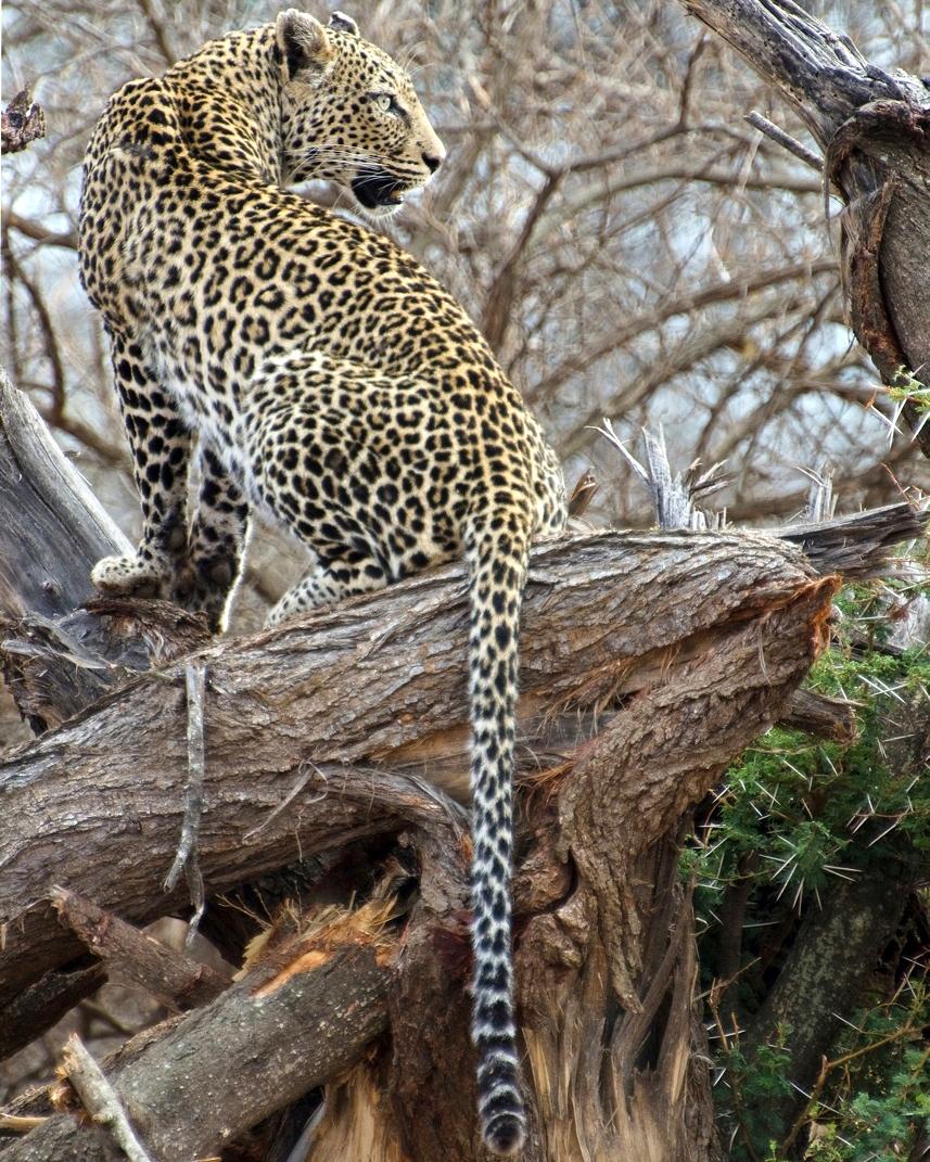 singita-pamushana-lodge-africa-wedding-venue-safari-0815.jpg