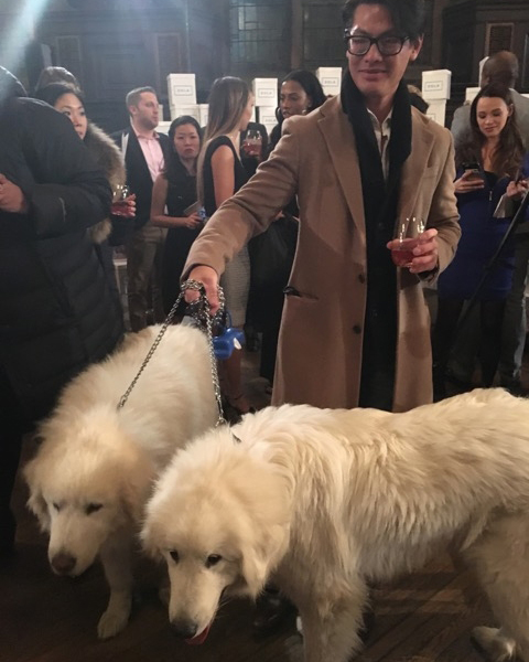 darcy-diary-dog-wedding-guests-1-0116.jpg