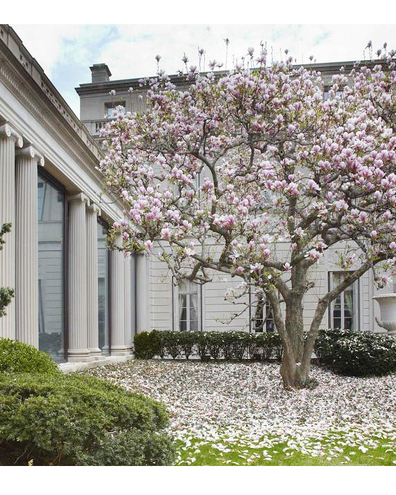 The Frick Collection Gardens