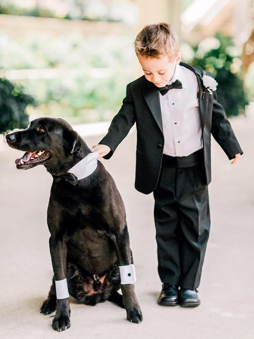 ring bearer tuxedo dog