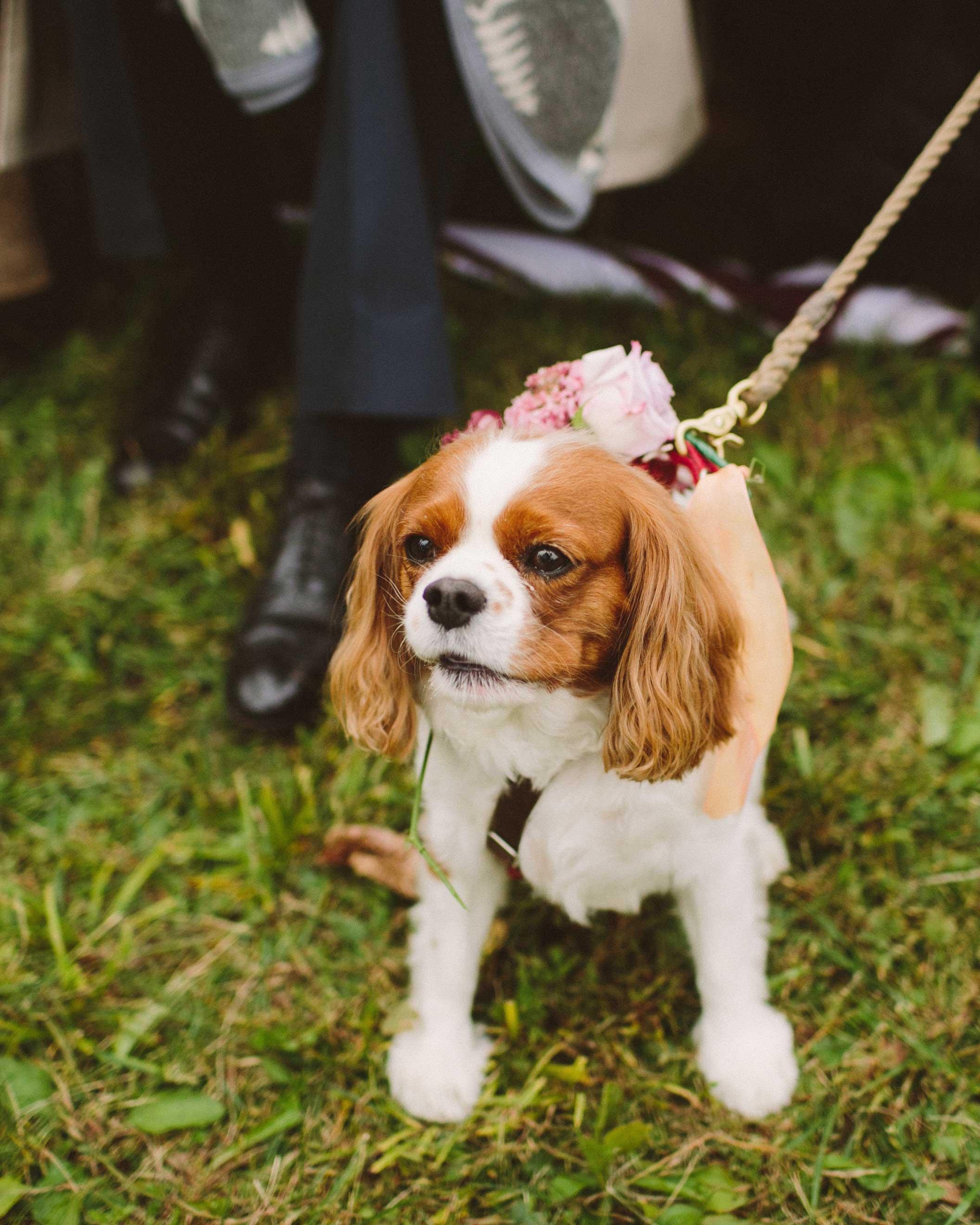 alisa-barrett-wedding-dog-558-s113048-0716.jpg
