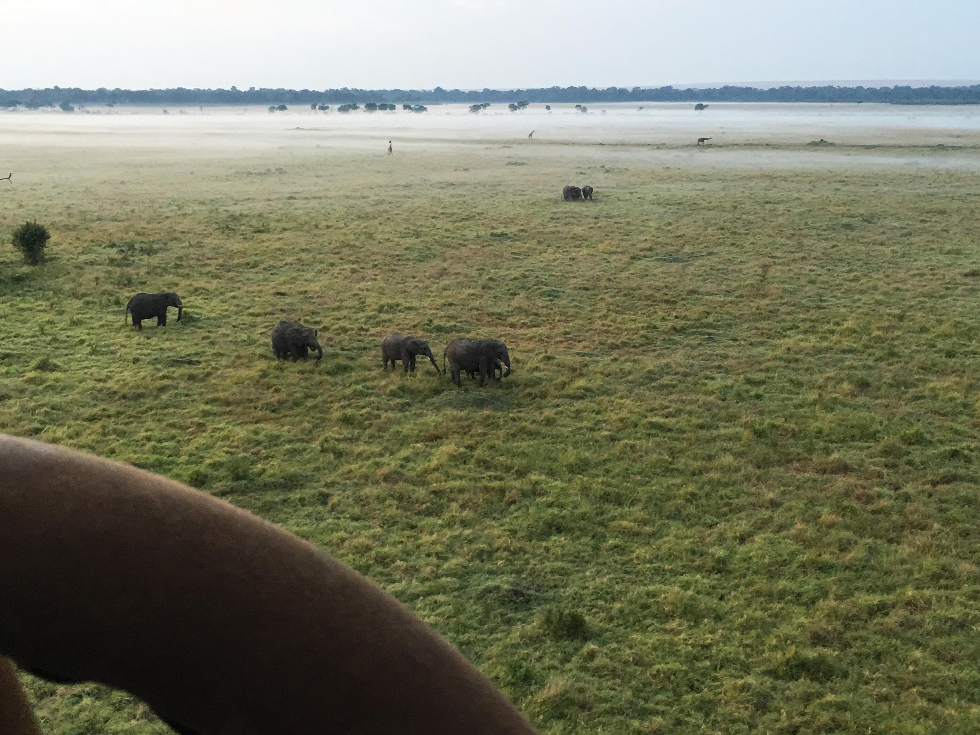 hot air balloon elephants