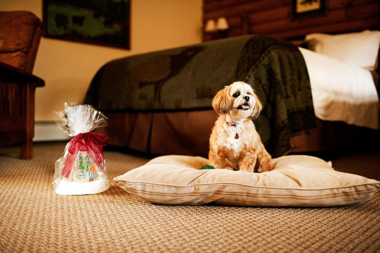 emerson resort spa pet friendly hotel
