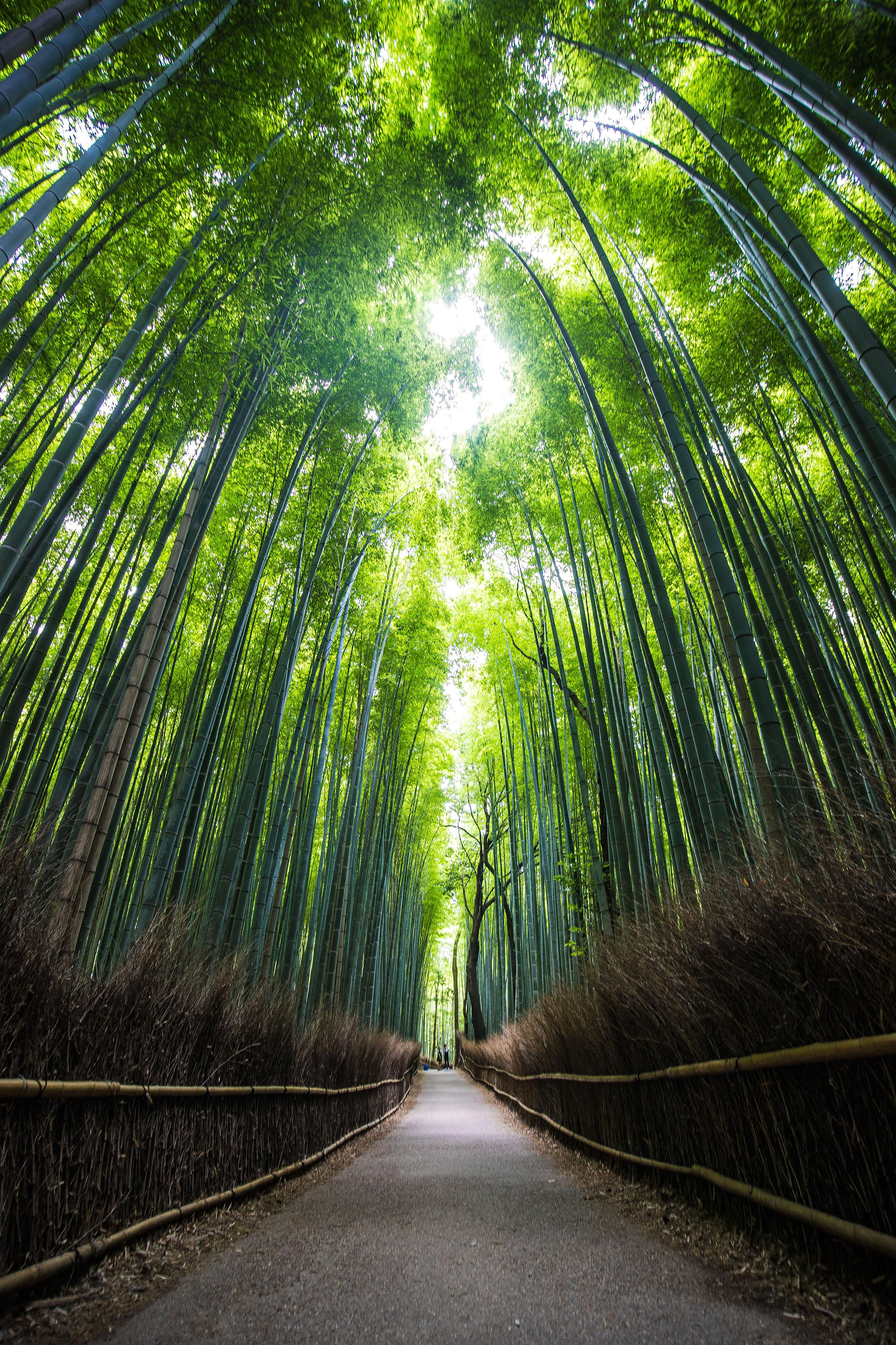 kyoto japan travel photo
