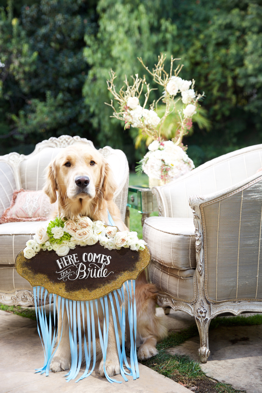glitter wedding dog