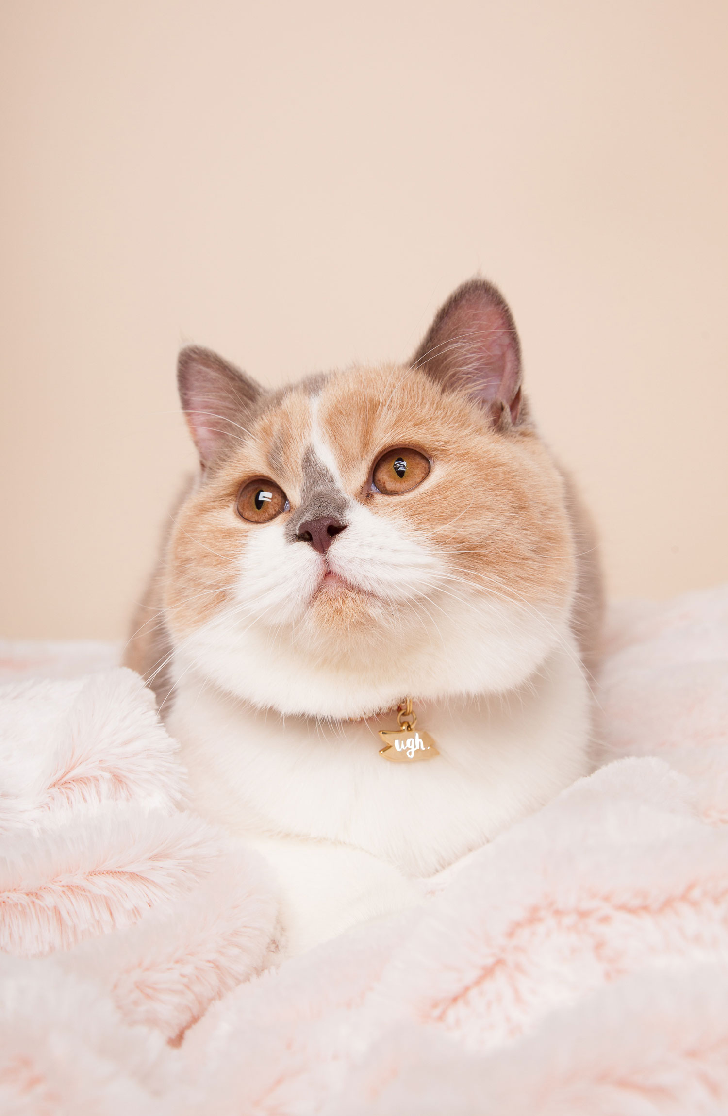 cat tag