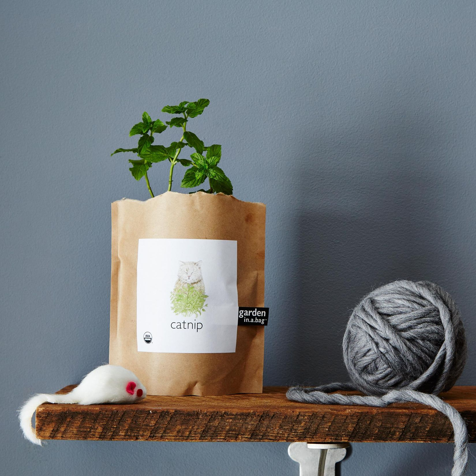 garden in a bag catnip