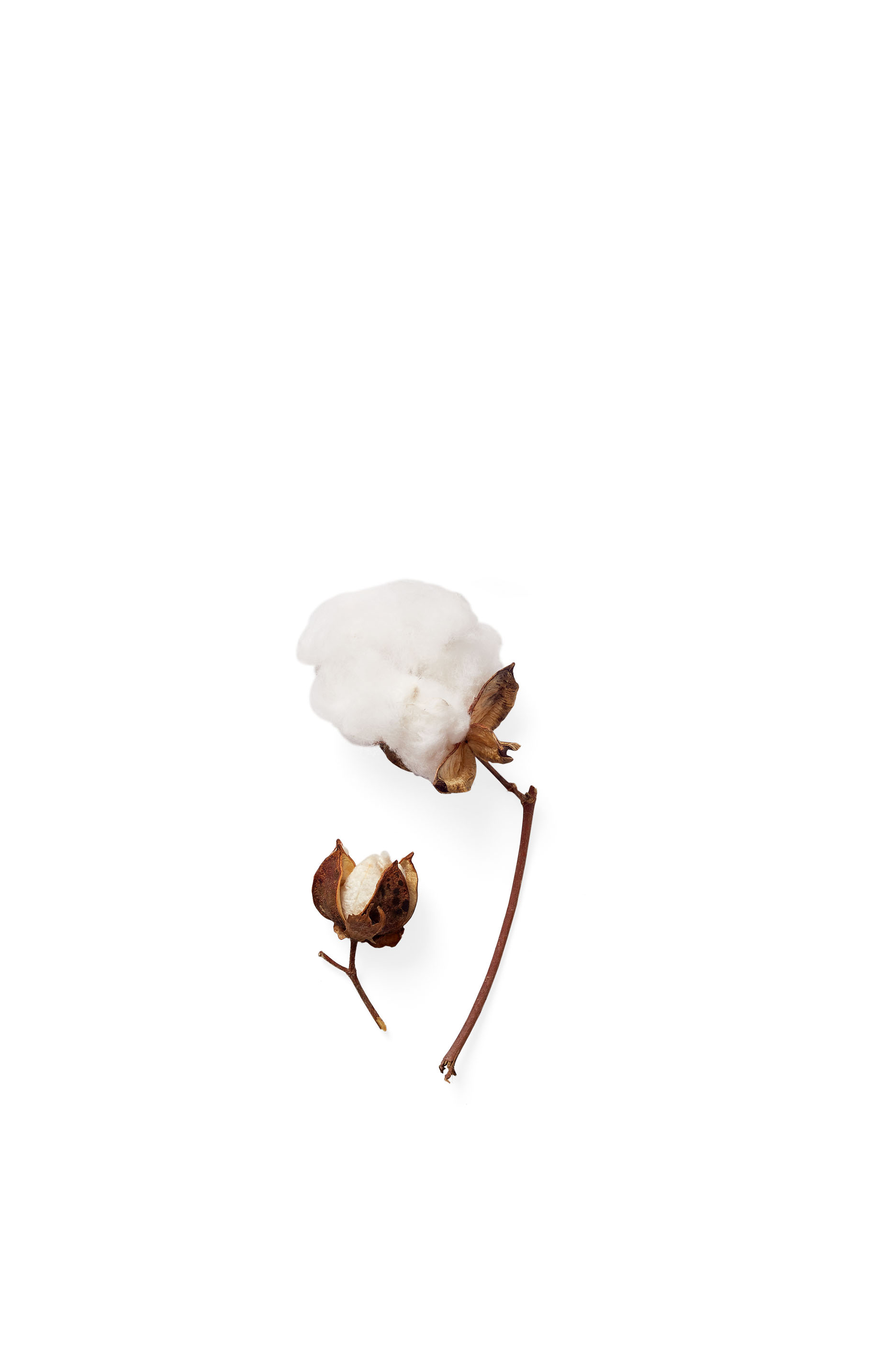 cotton detail