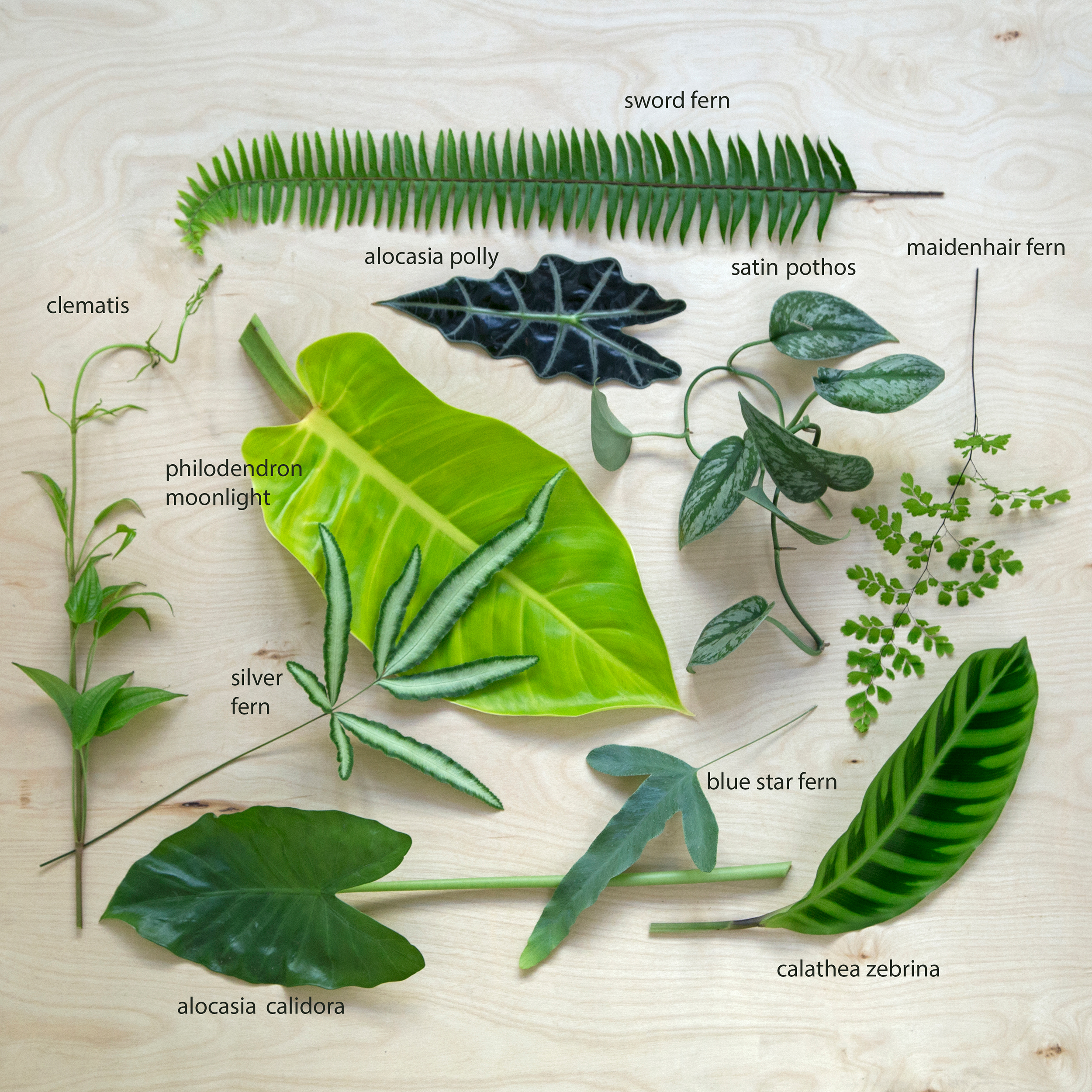 Foliage DIY Different Types of Greens