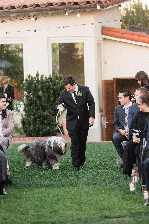 bride and groom wedding dog
