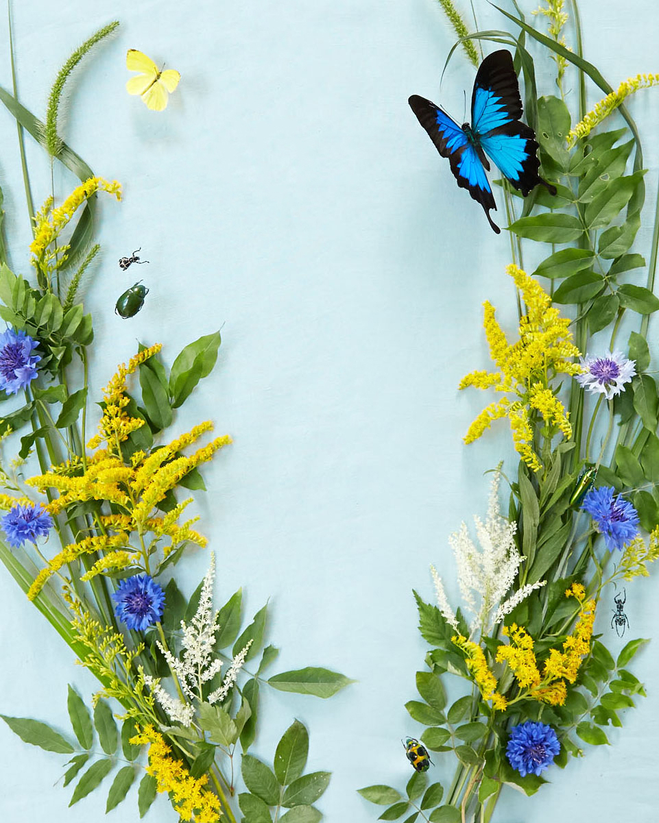 katie samuel floral insect decor