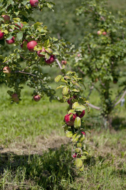 Ecker's Apple Farm