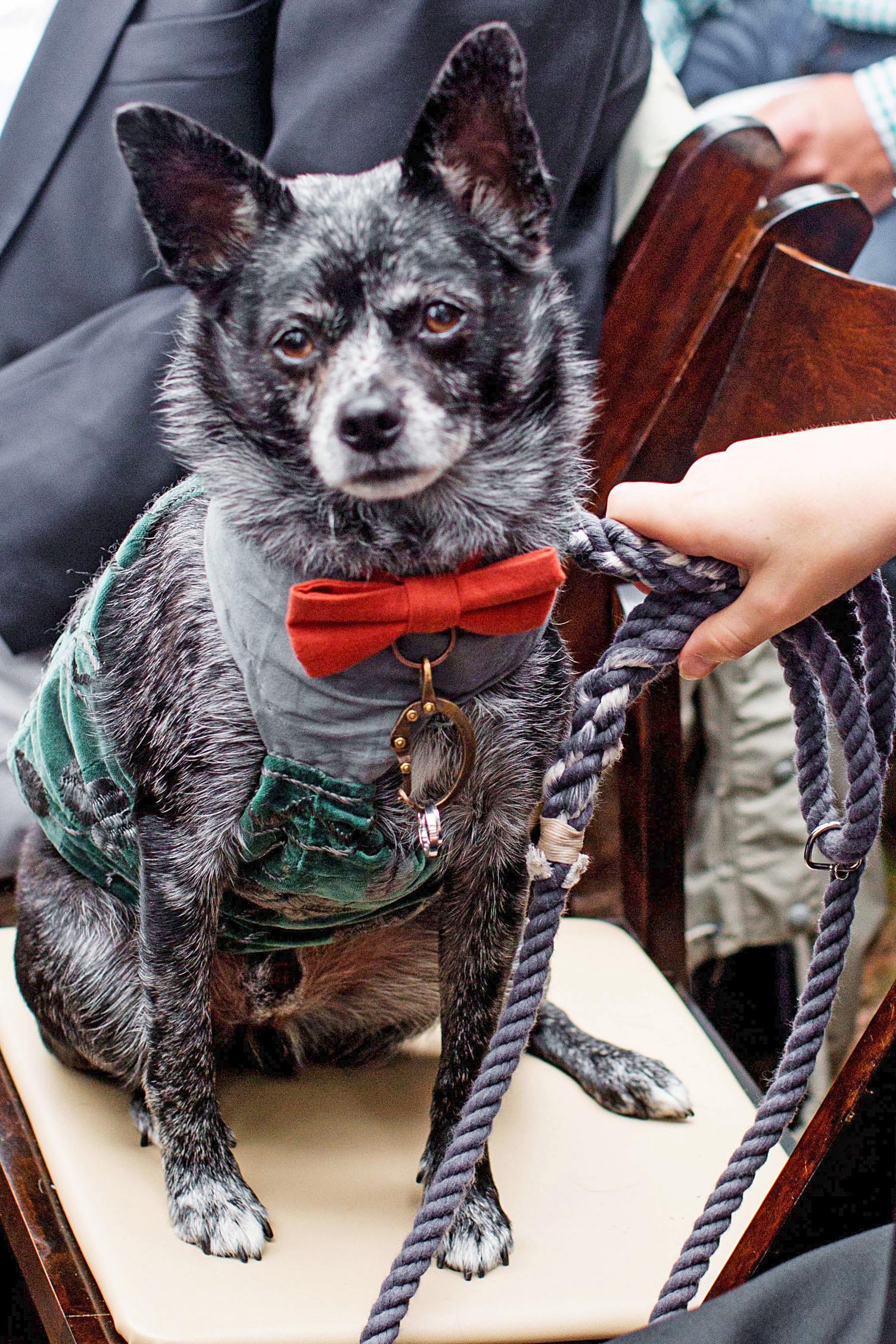 adele seth wedding michigan ring bearer dog