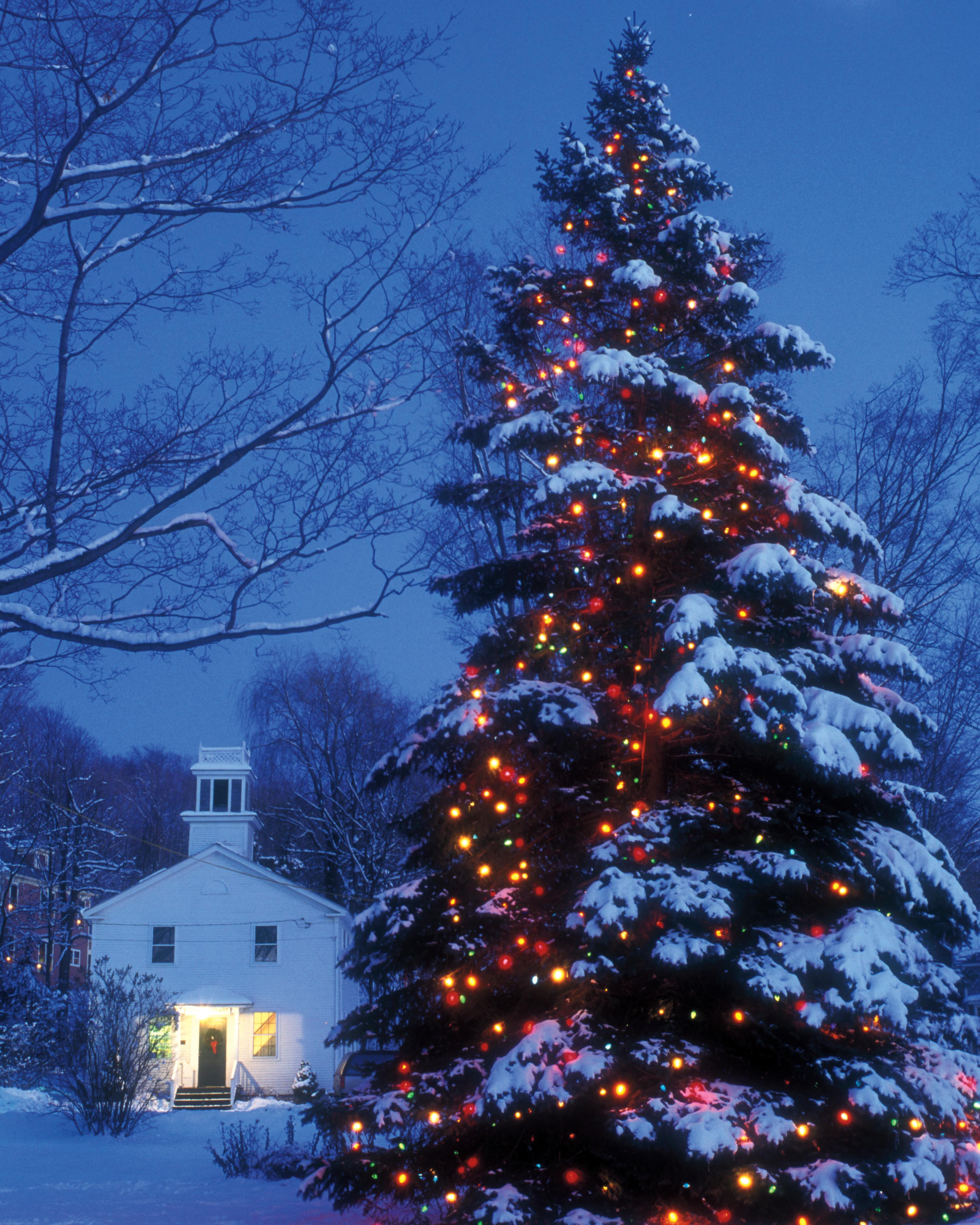 large-outdoor-christmas-tree-lights-s111579-a6e2e0.jpg