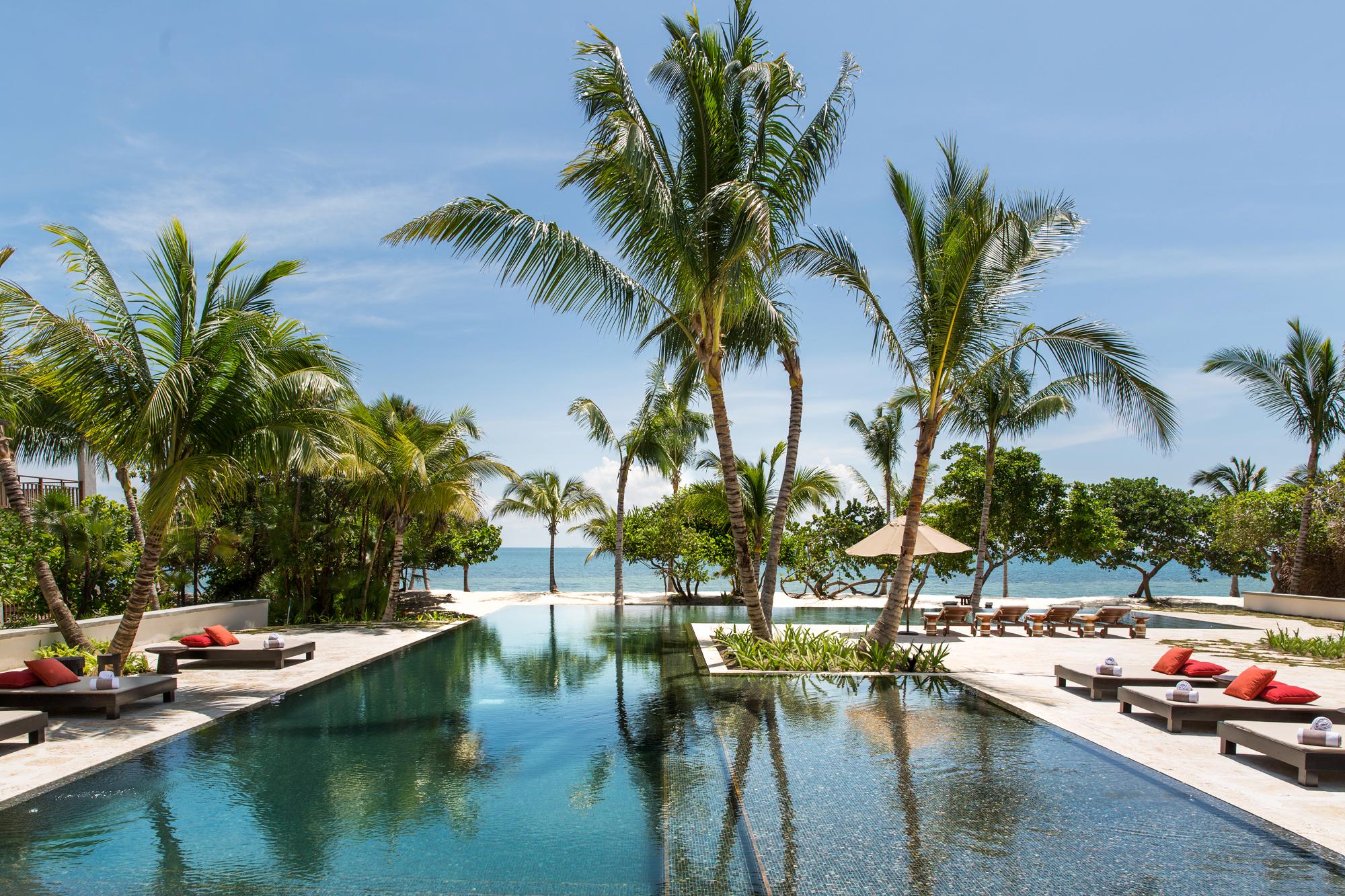 resort pool palm tree