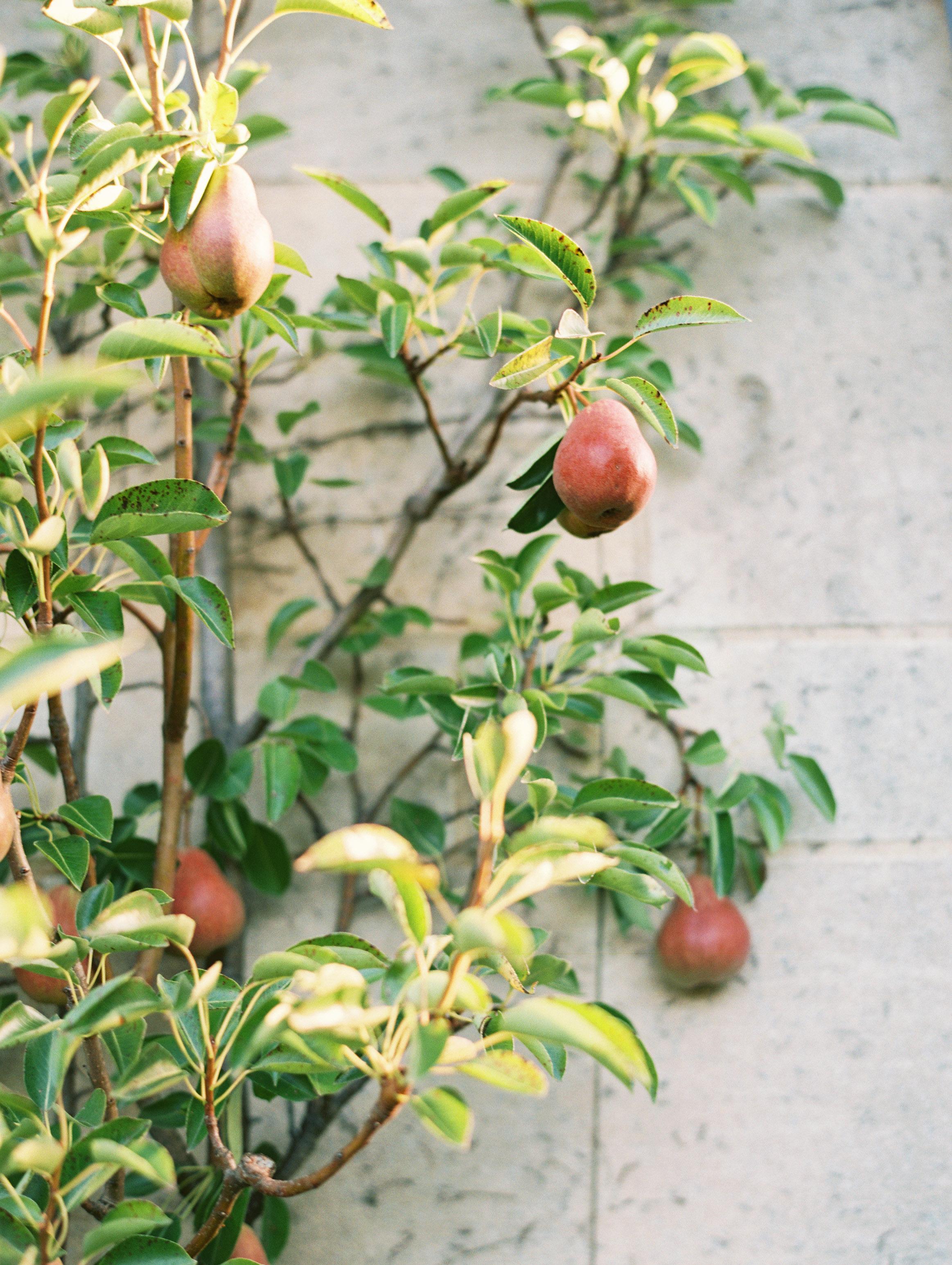 miya matthew wedding pears