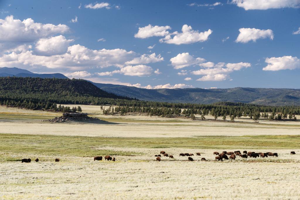 dude ranch honeymoon vermejo park ranch buffalo grass sky pasture
