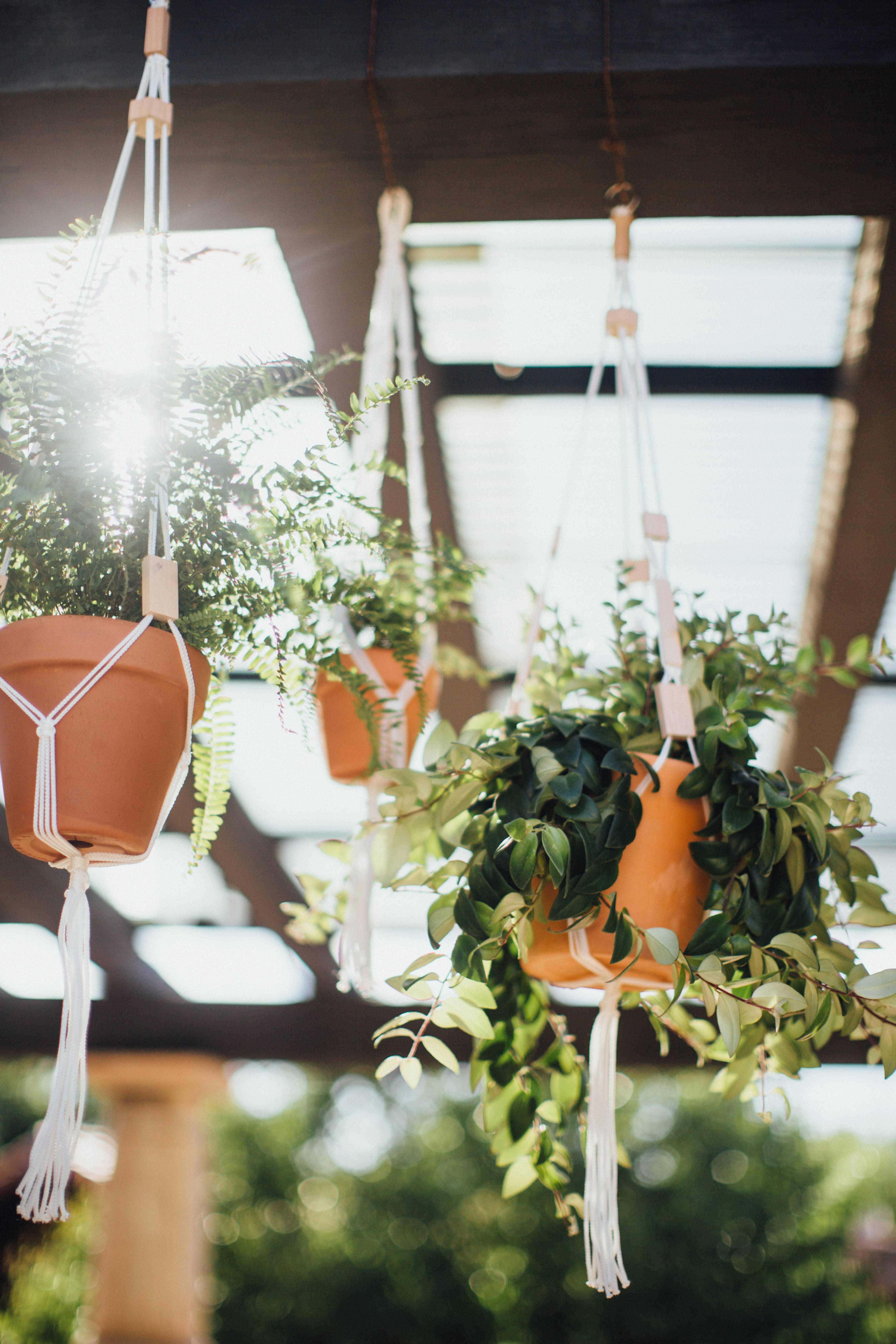 Plant Hangings