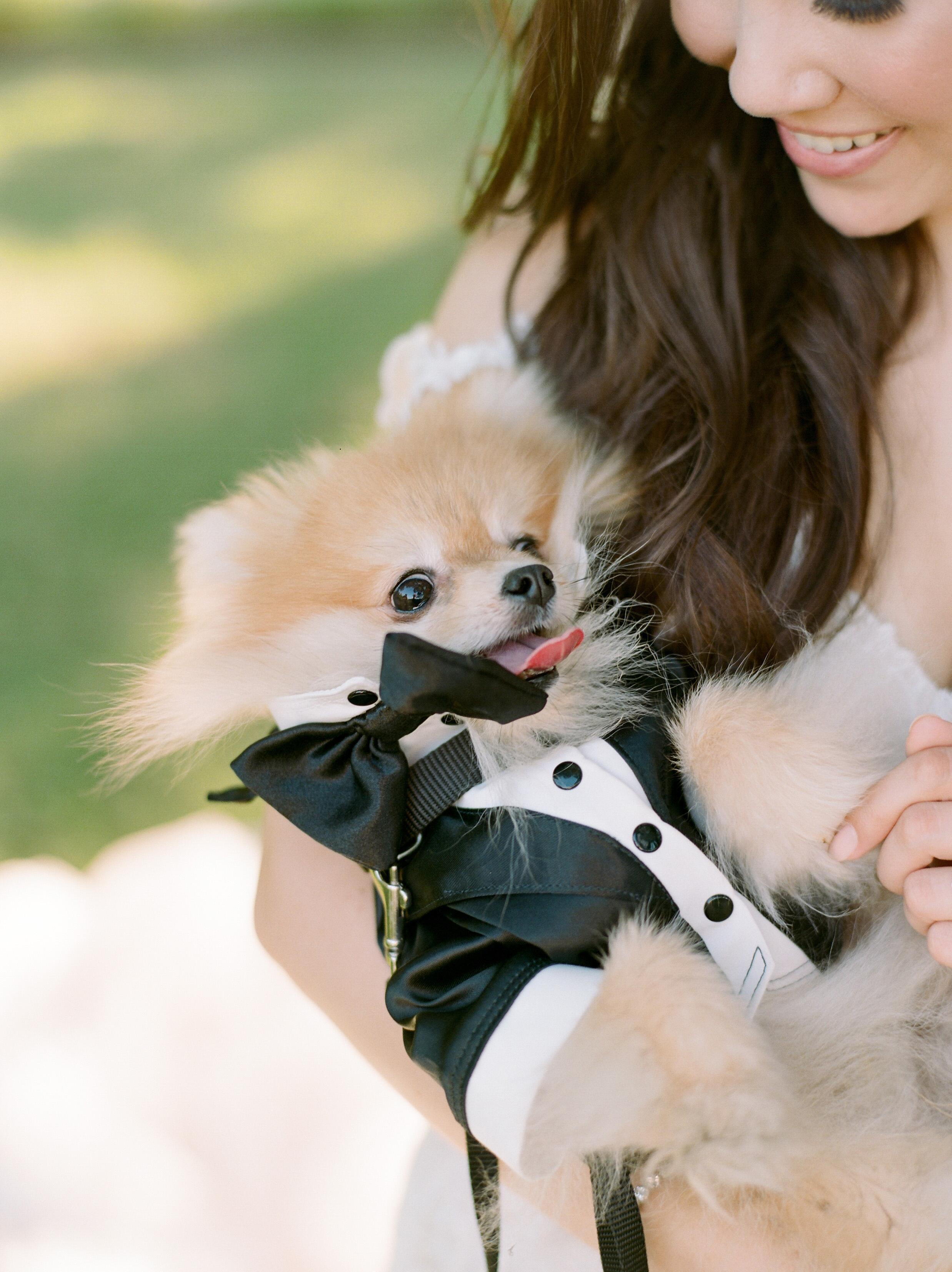 texas wedding small dog tux cuddle