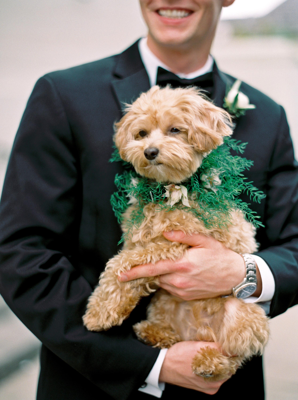kate austin wedding dog groom