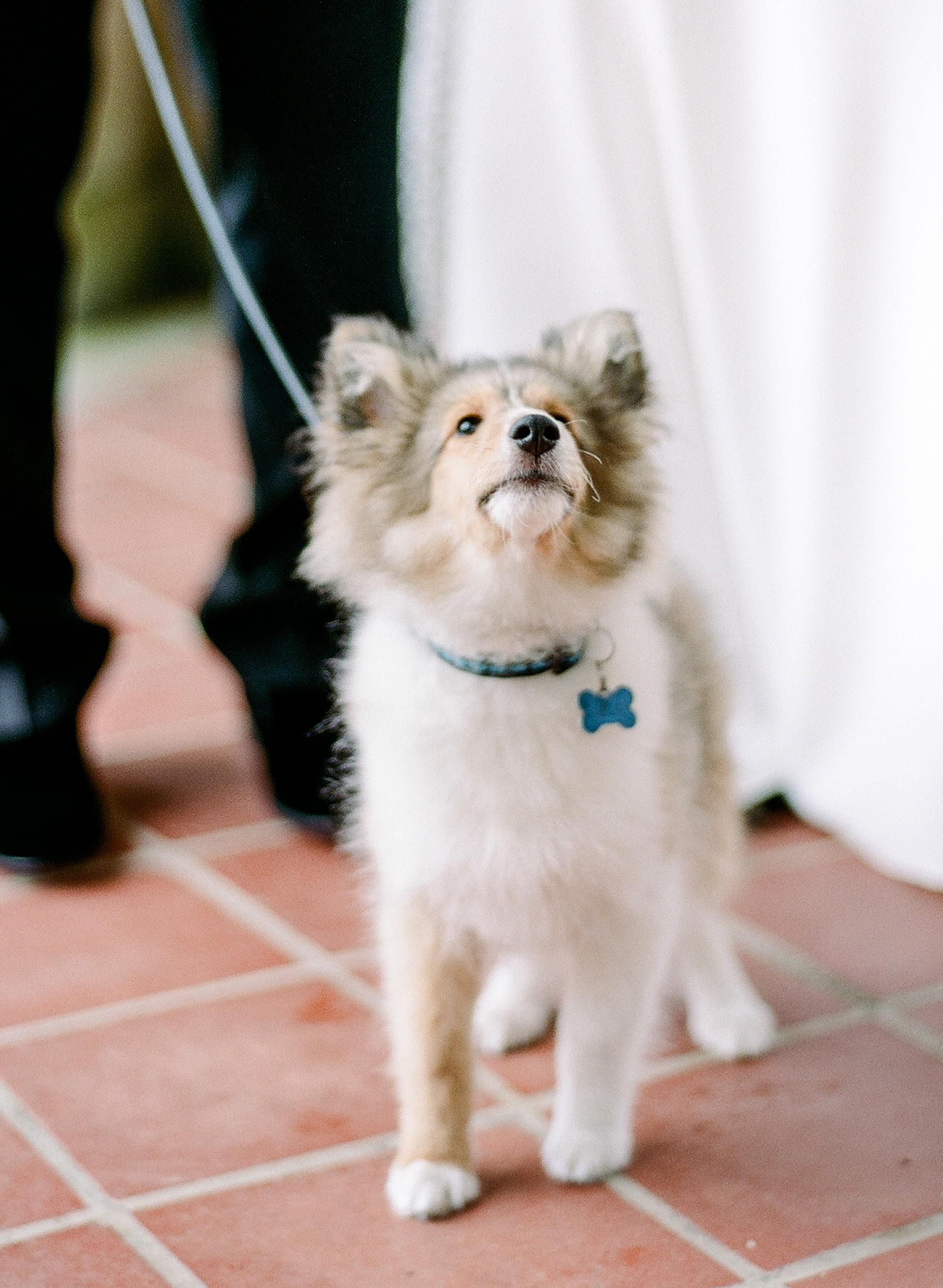 michelle robert wedding dog