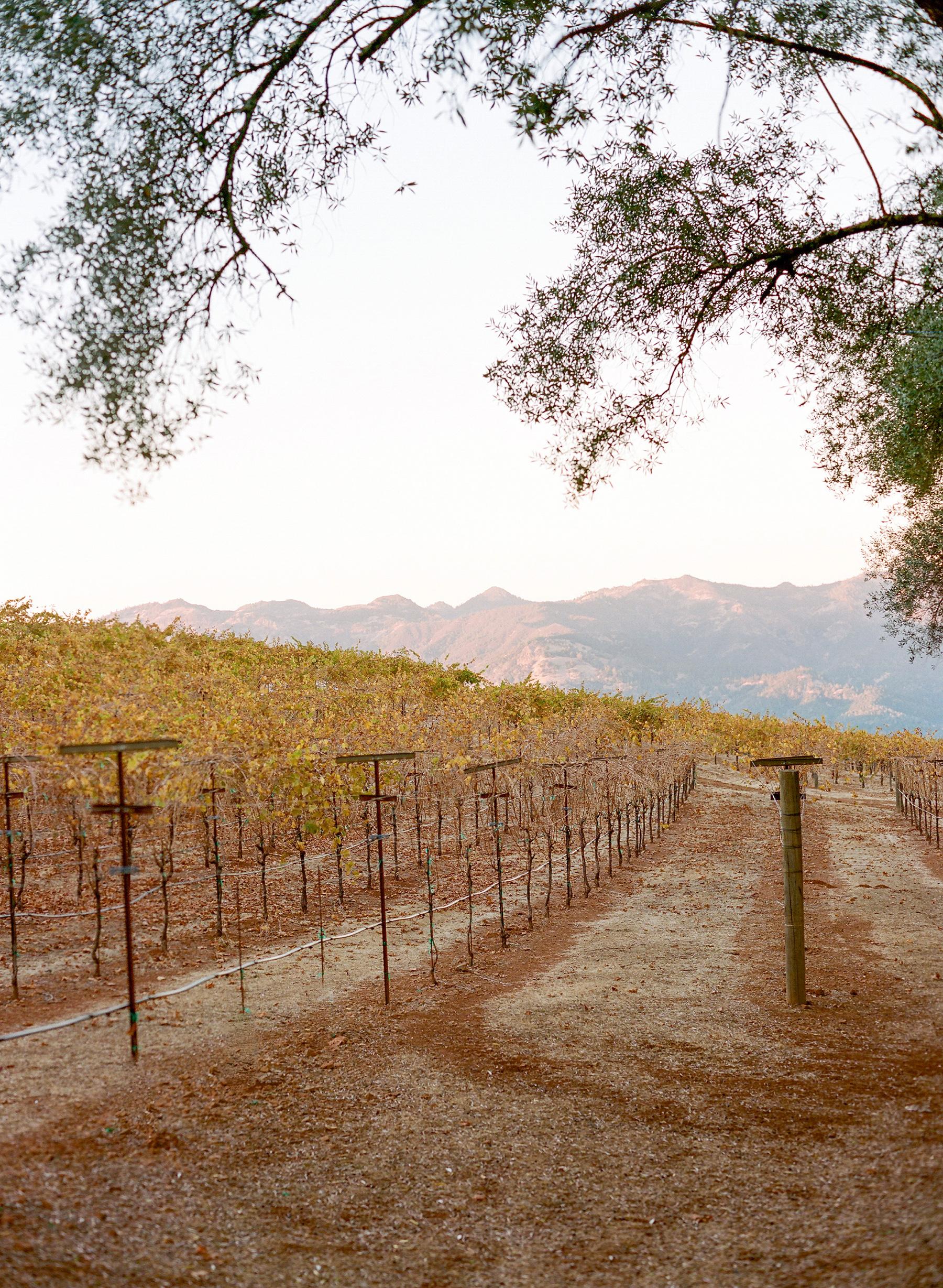 jenna alok welcome party vineyard