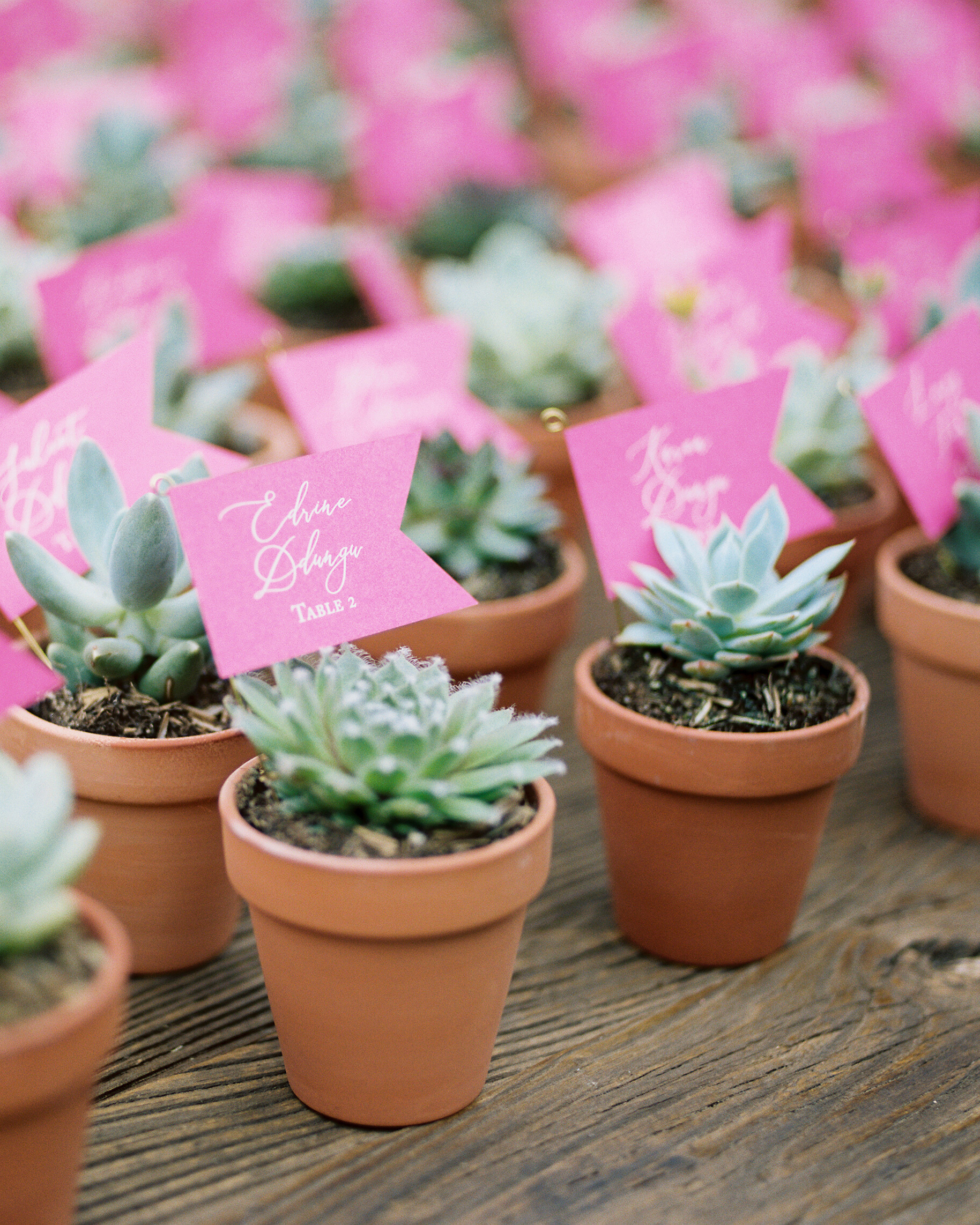 amy mark california succulent favors
