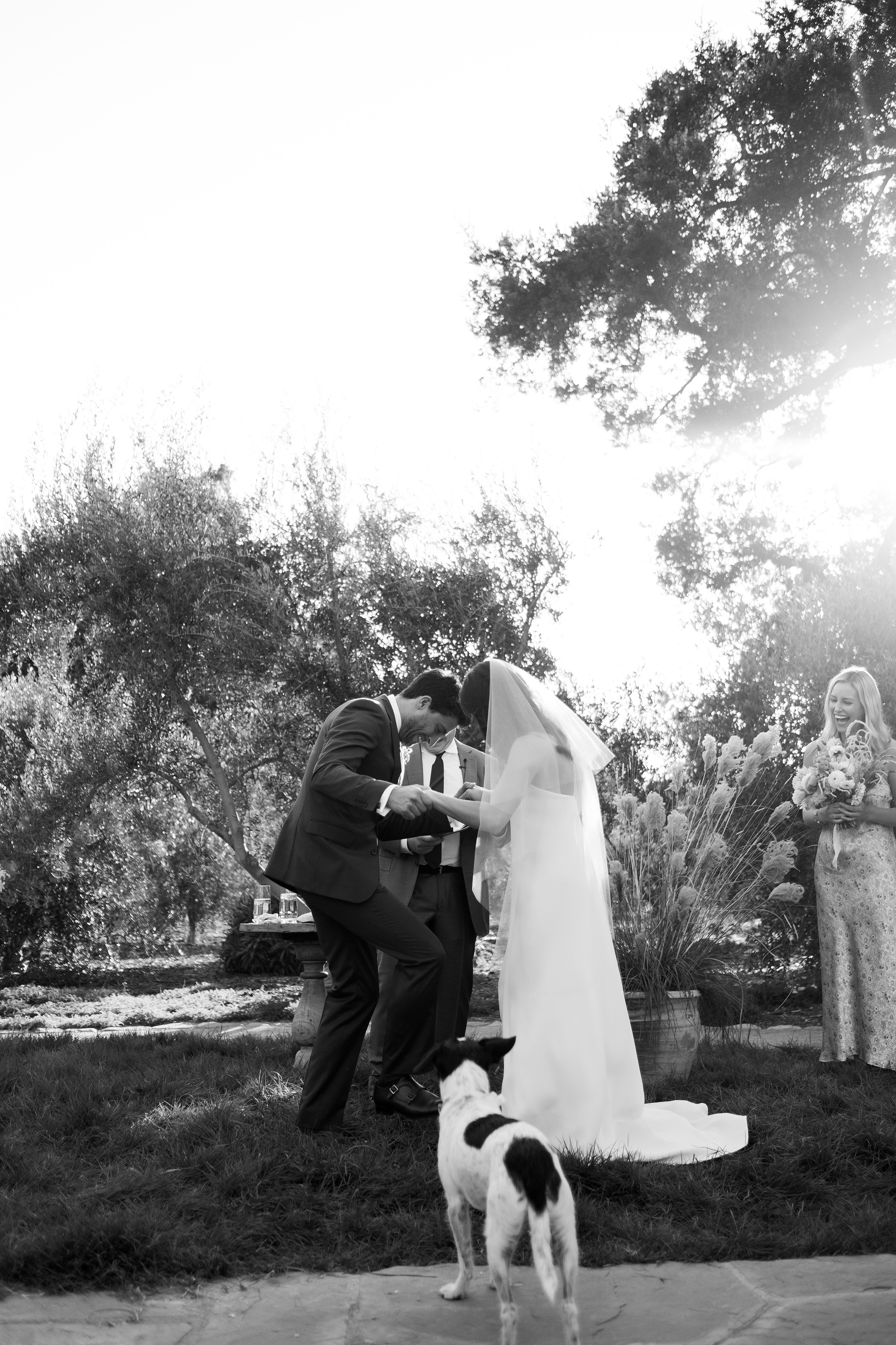 anika max wedding ceremony black and white dog breaking glass