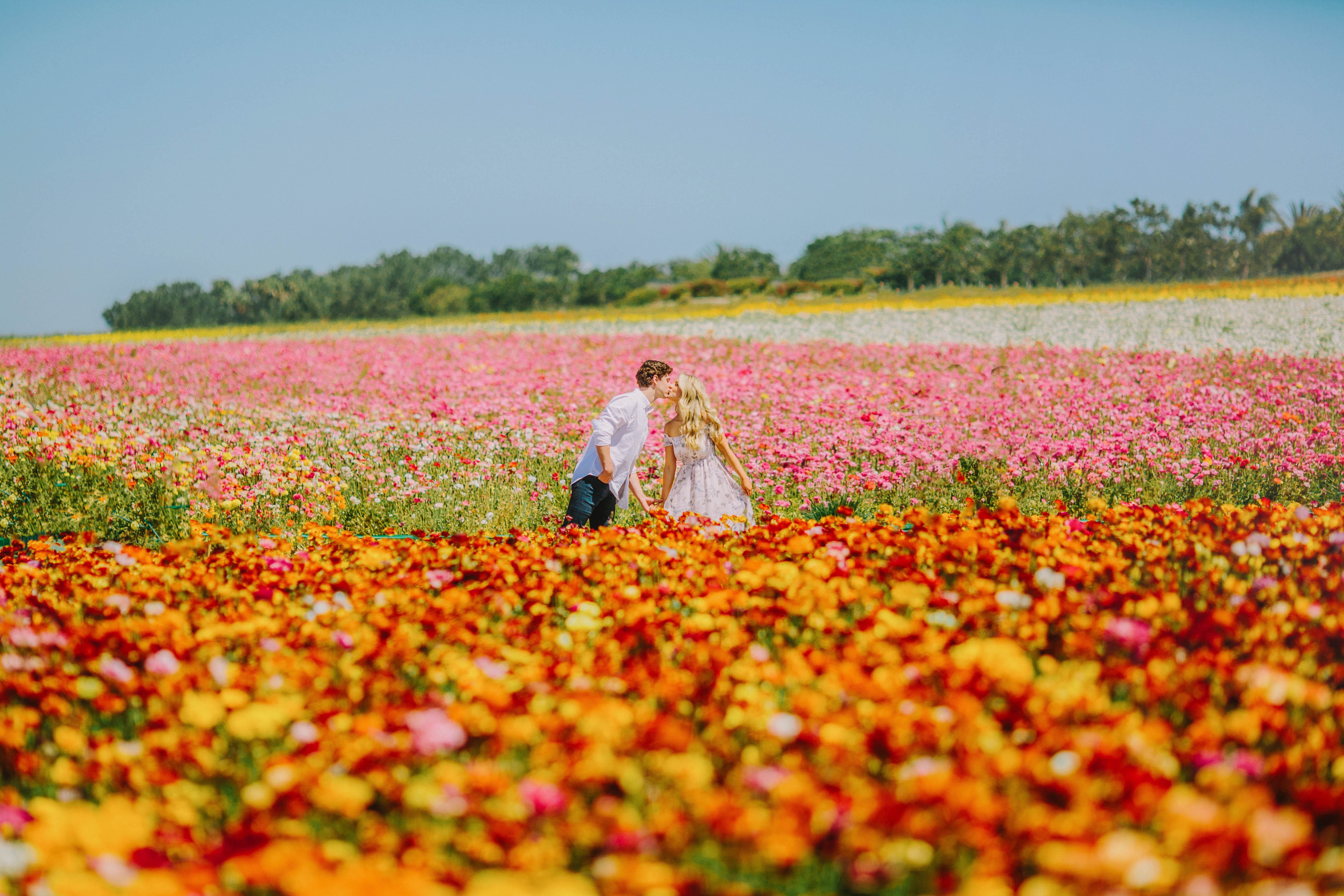 destination engagement couple kiss ranunculus flower field