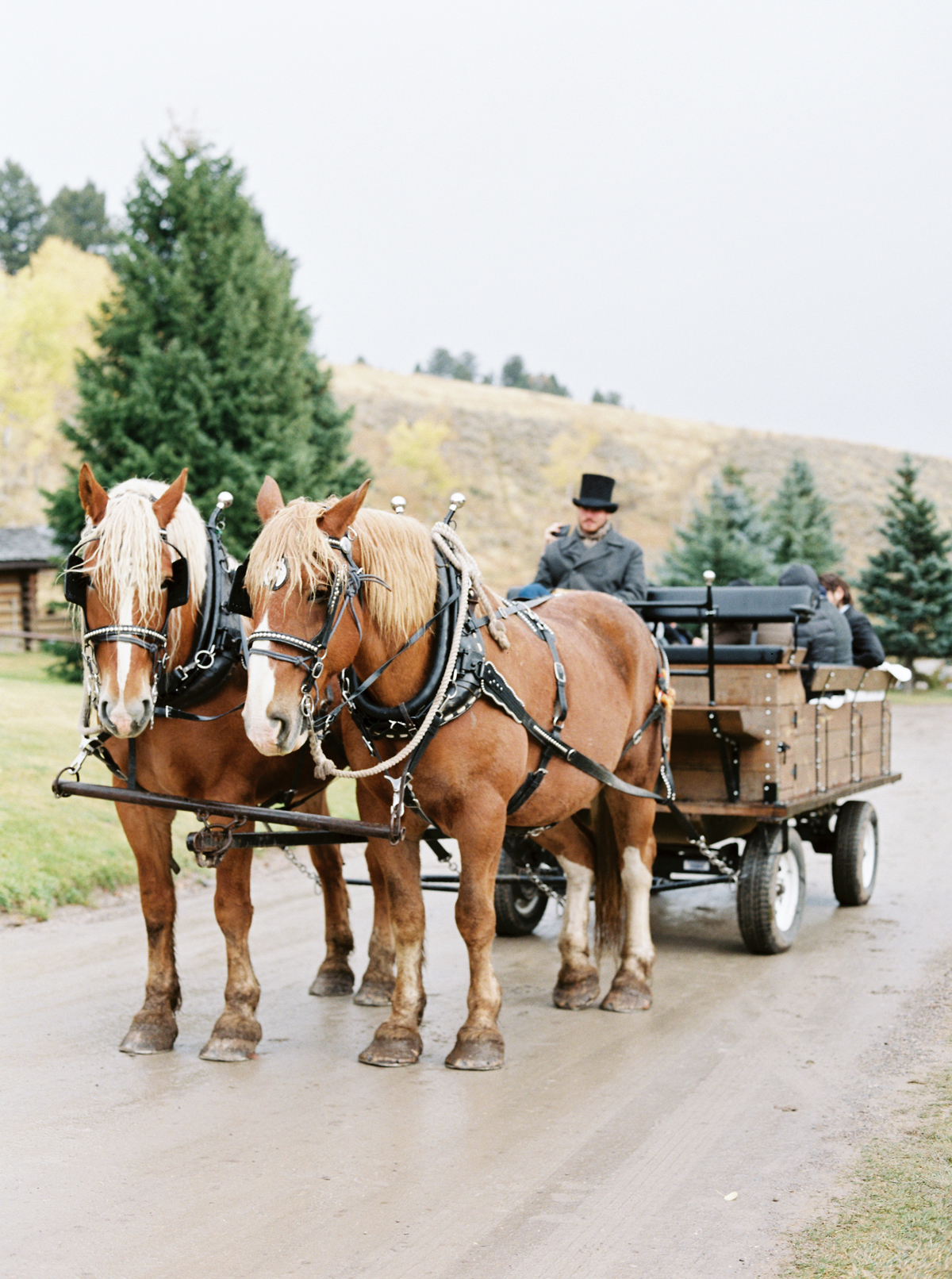 wedding transportation horse drawn carriage