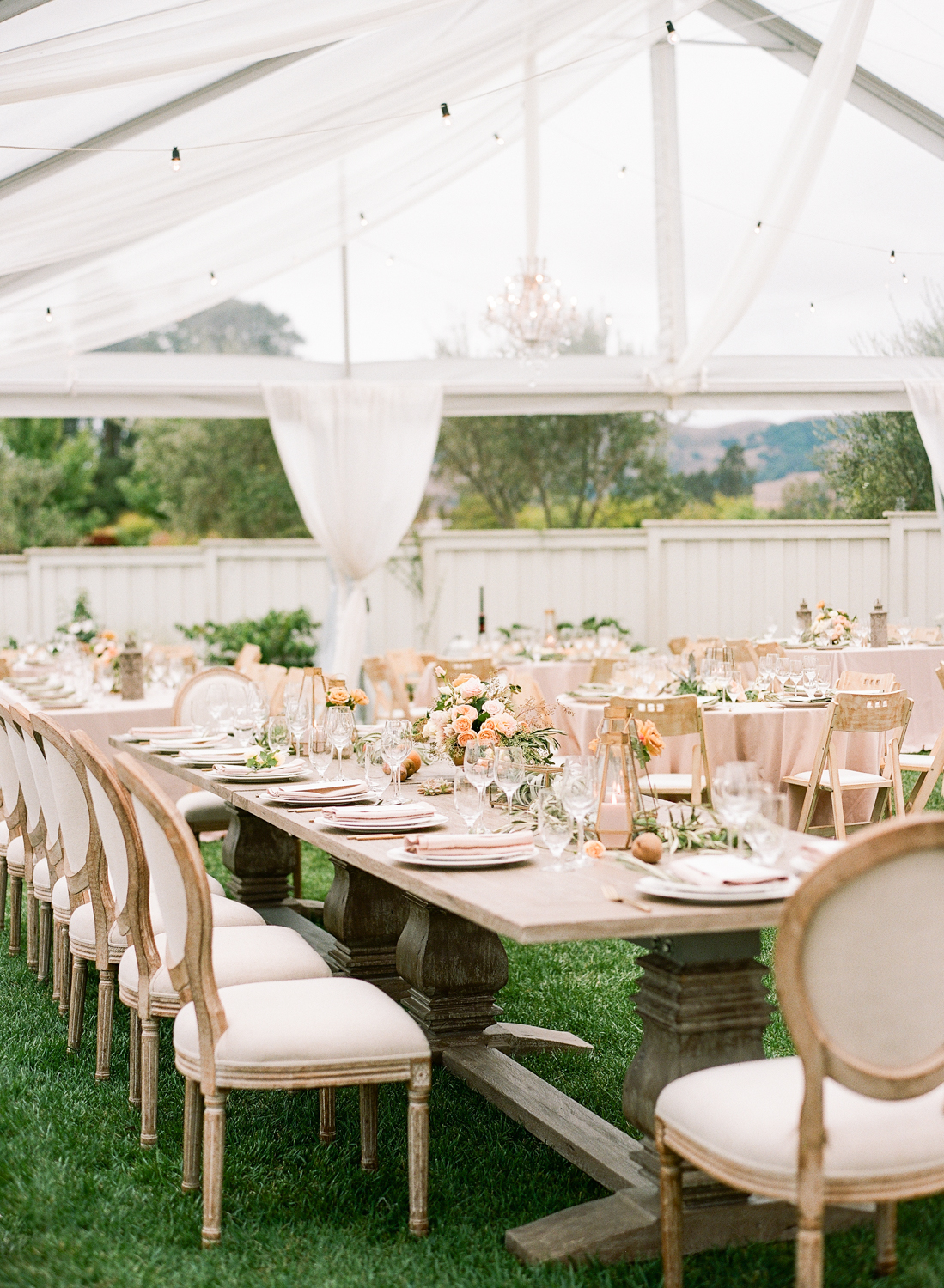 clear tent reception on lawn surrounded by grape vines