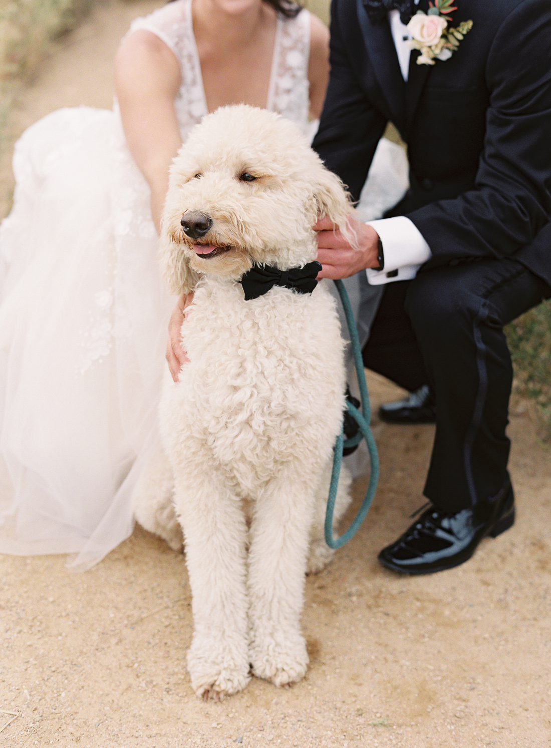 bride and groom's dog as best man with bowtie