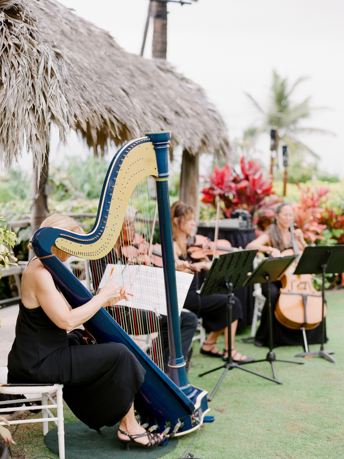string quartet playing at Four Seasons Lumeria Garden
