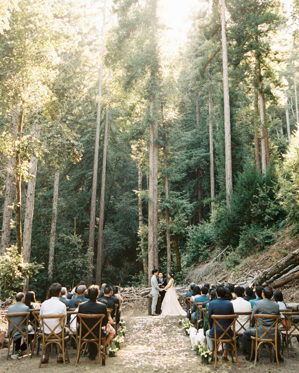 flower petals on outdoor forest aisle