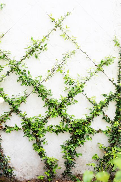 restaurant wedding ideas crawling greenery vine