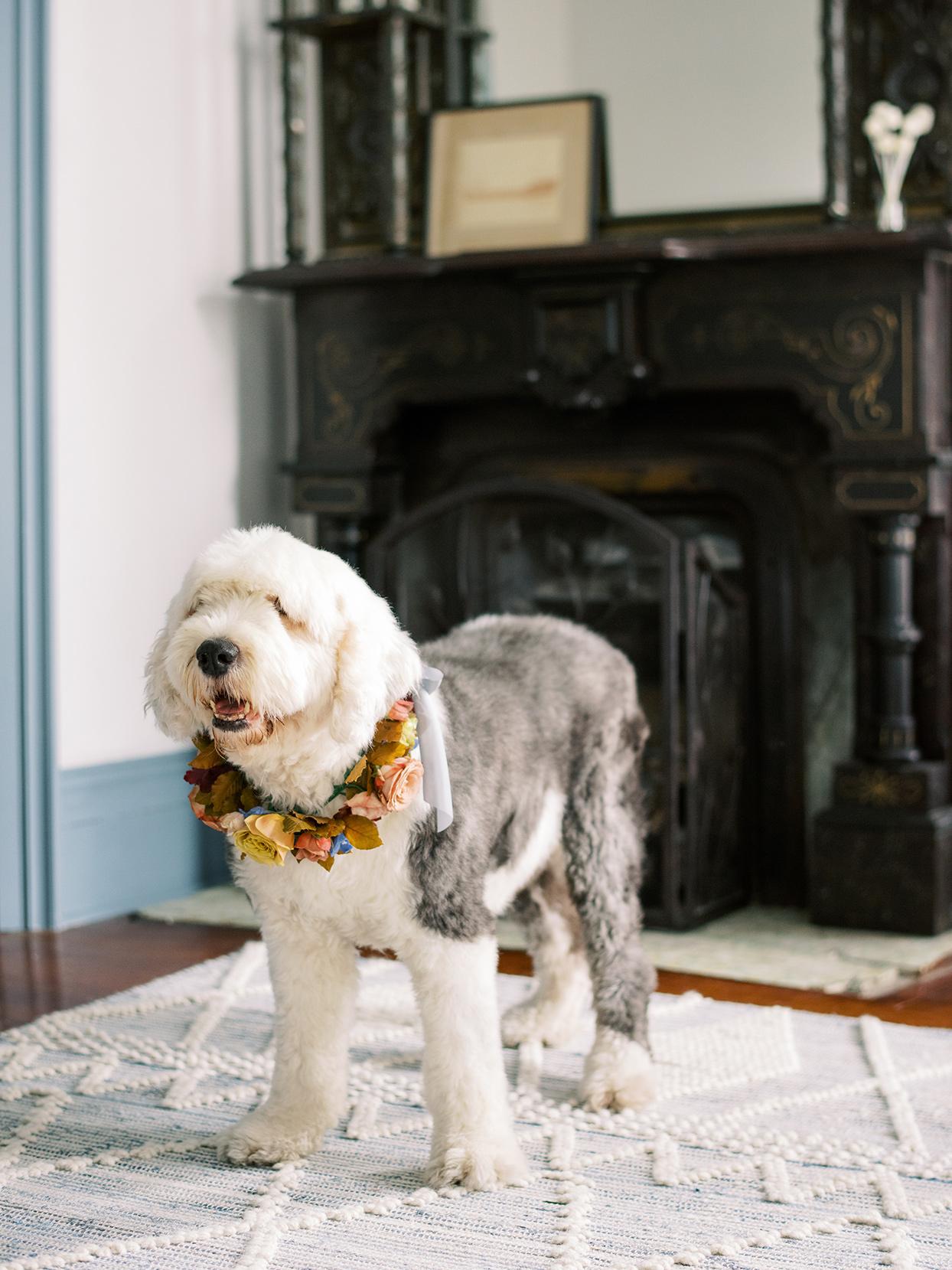 elizabeth scott wedding dog