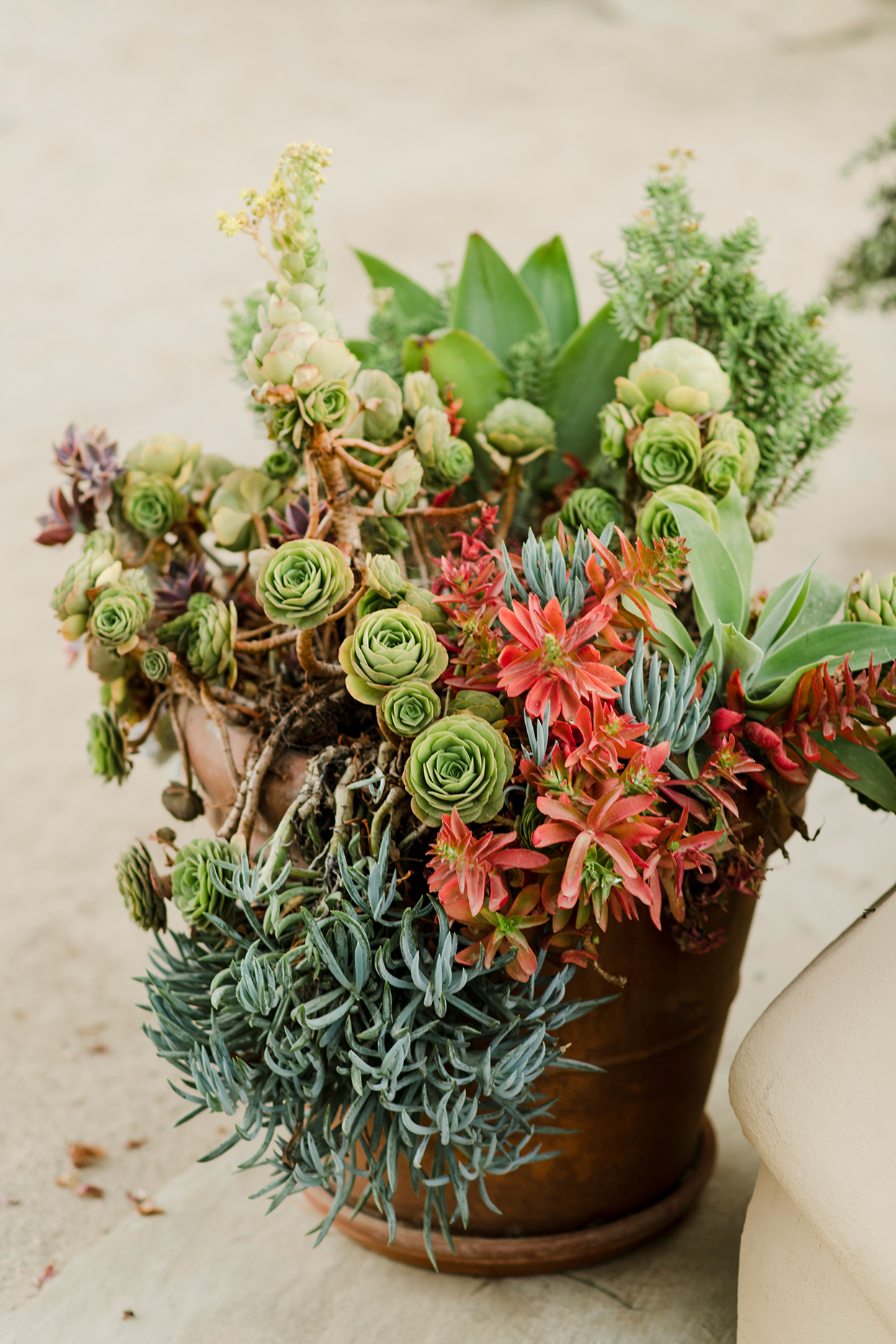 maddy will wedding succulents in pot