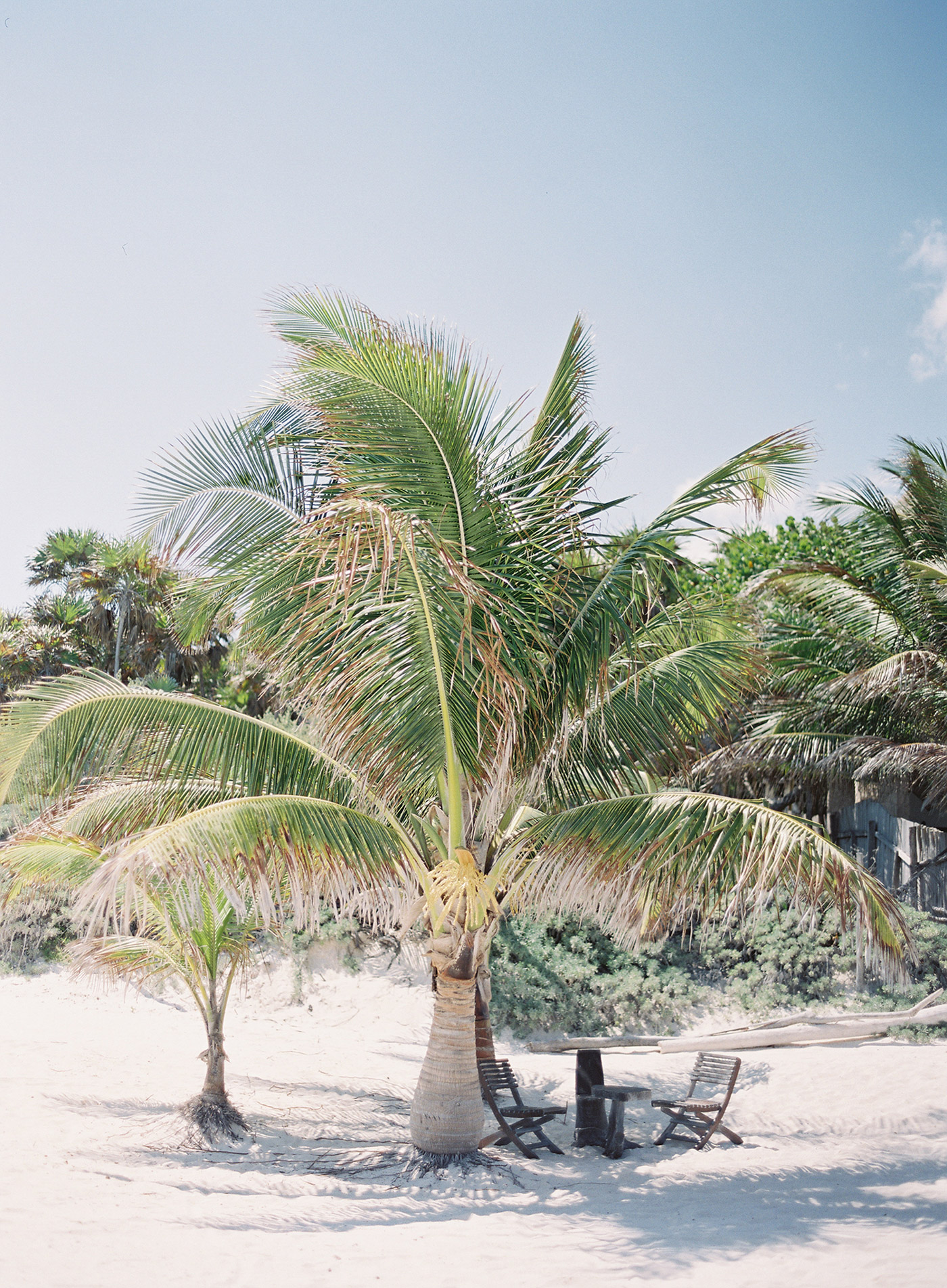 palm tree next to small sitting area on beach