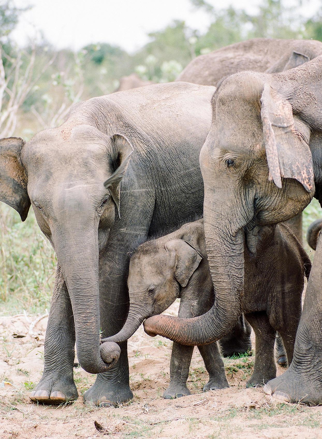 kelly sanjiv wedding safari elephants