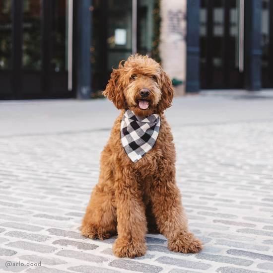 Foggy Dog Black and White Check Flannel Bandana