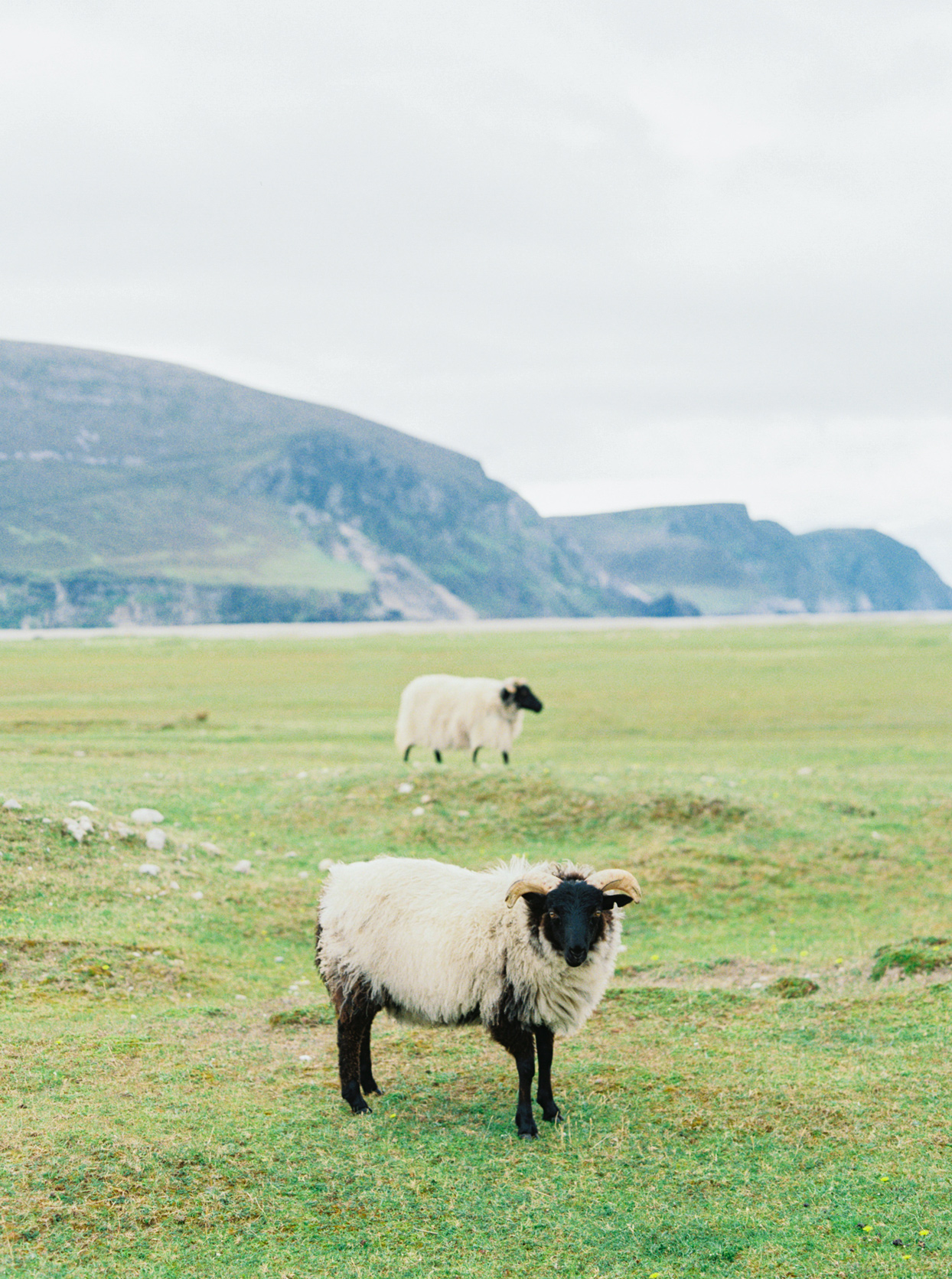 two sheep on grassy field in Ireland
