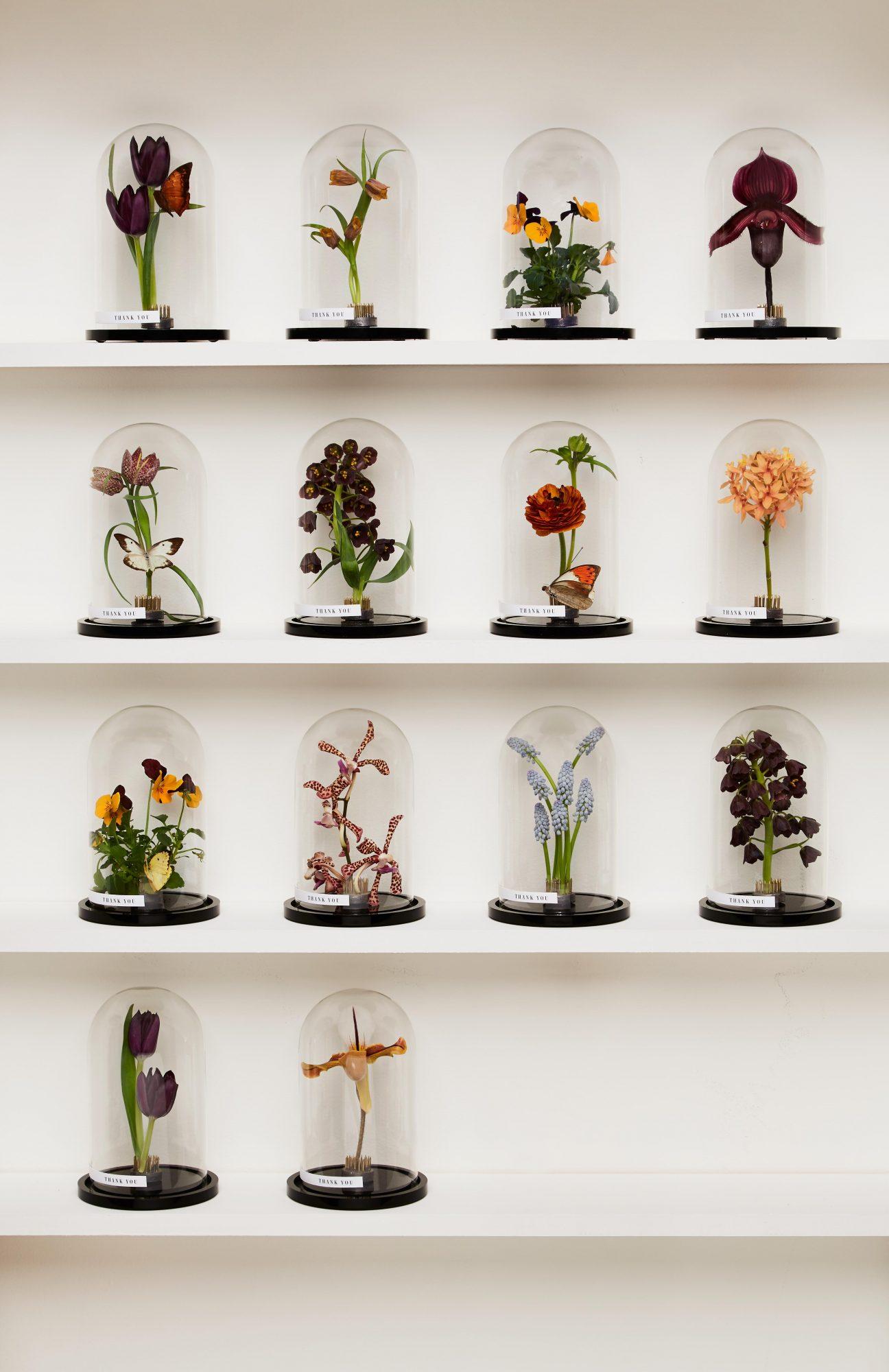 Flower specimens