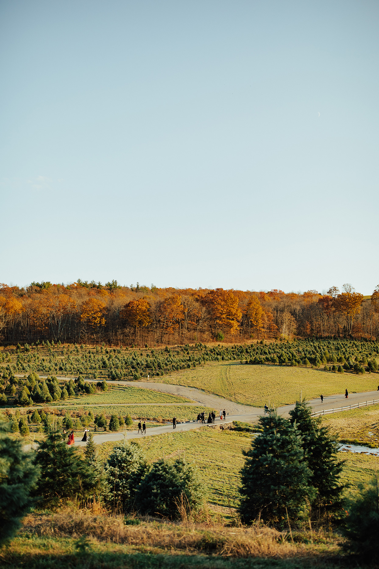 noelle danny wedding tree farm venue