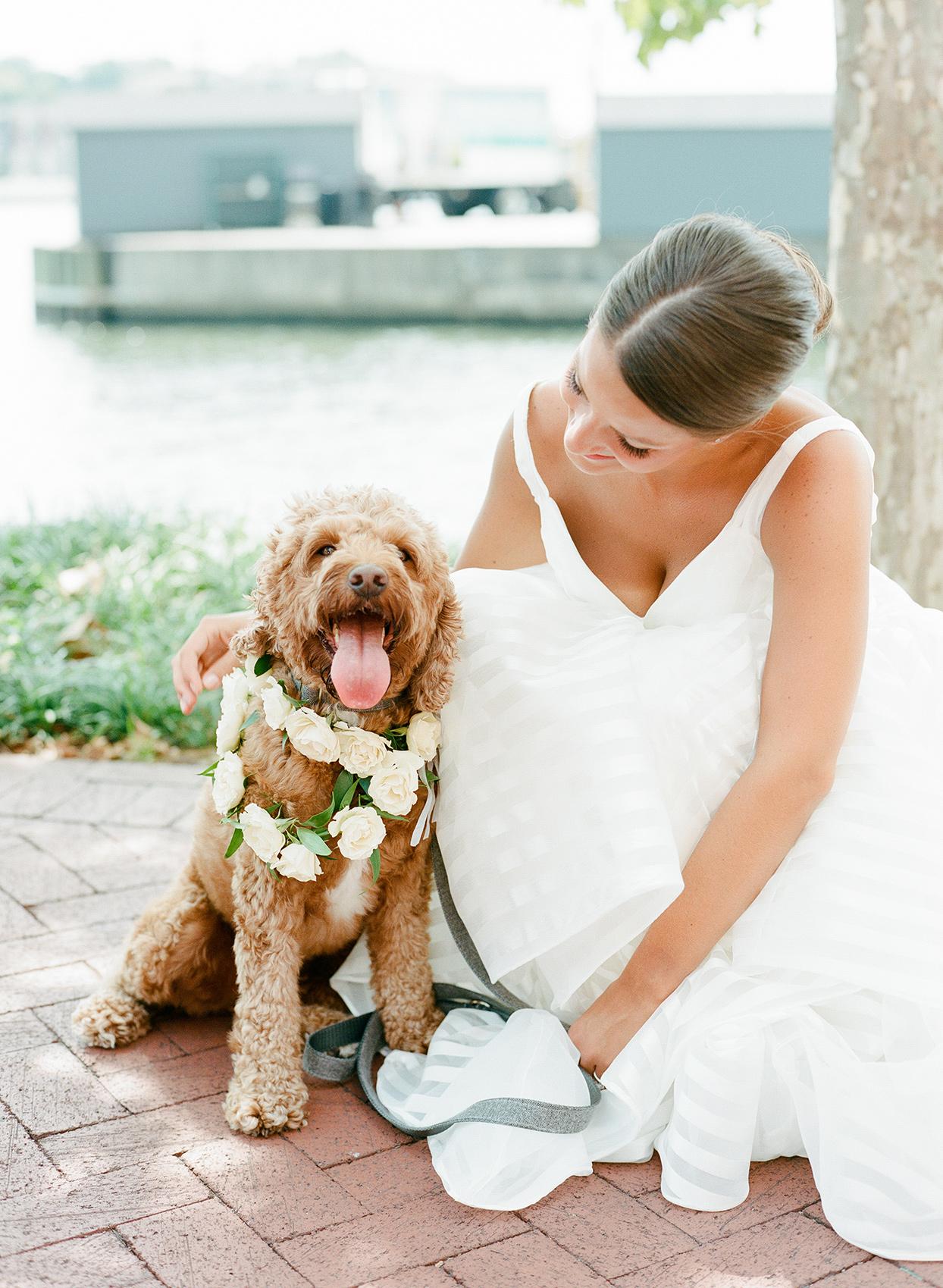 shelby david wedding bride with dog
