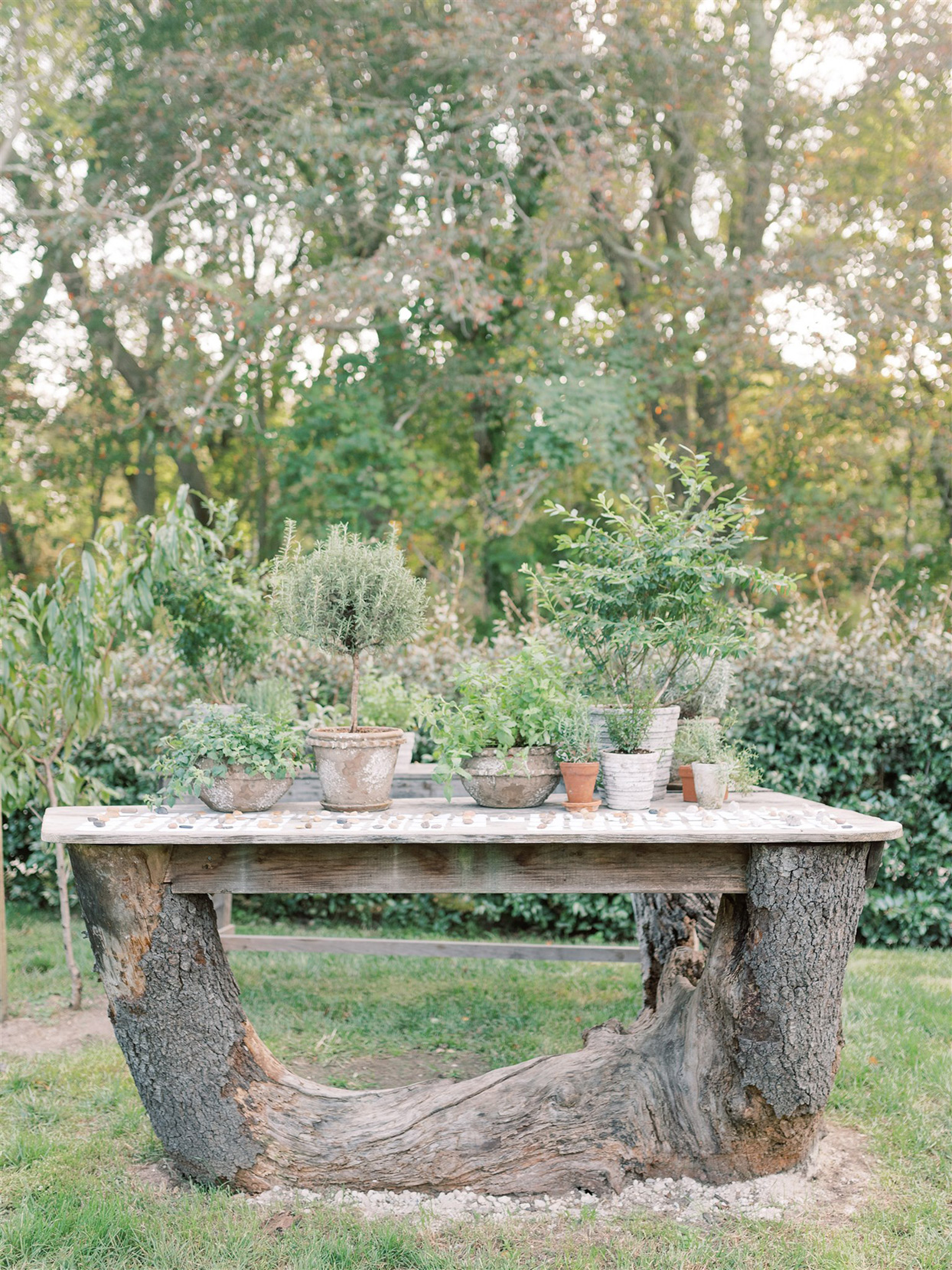rustic escort cards table made out of tree trunk